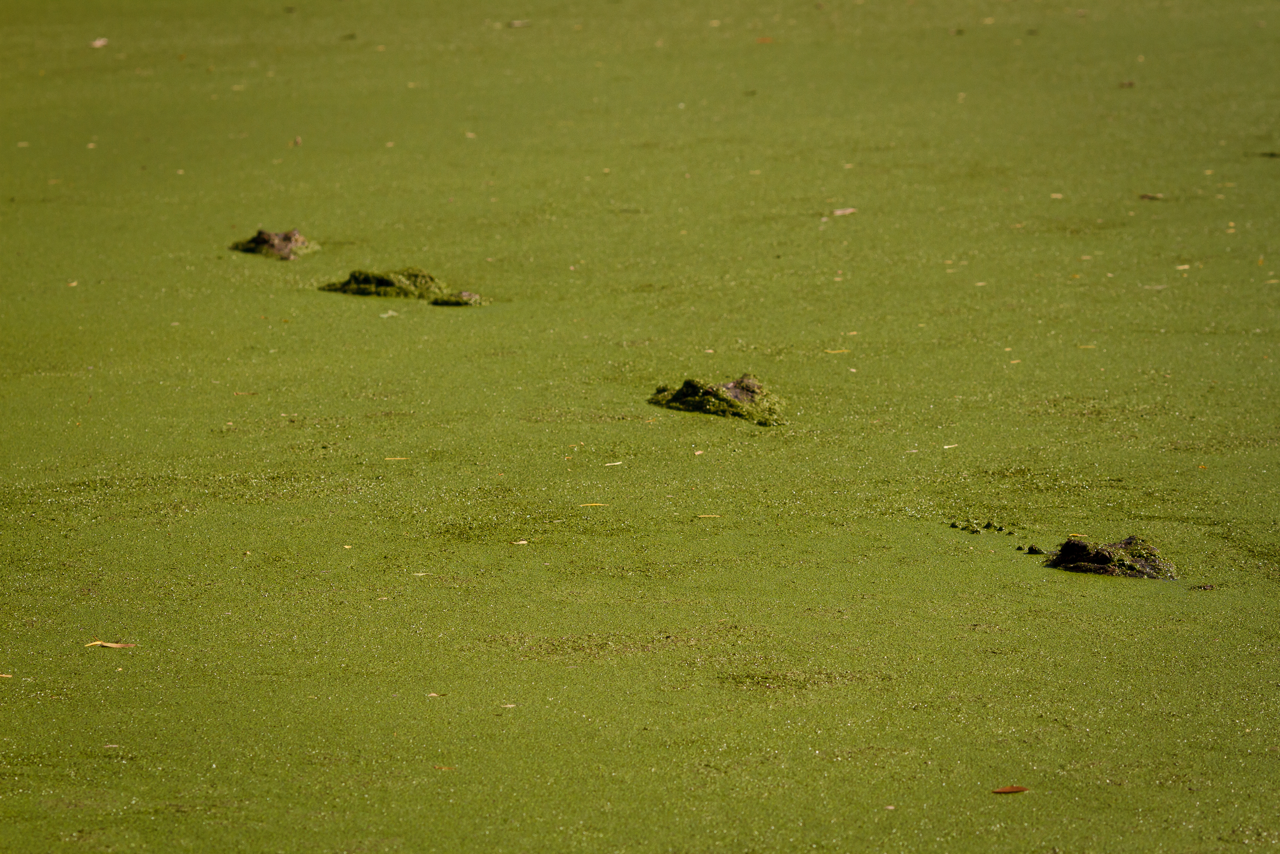 135 mm-20151222-145902-Broome Crocodile Farm.jpg