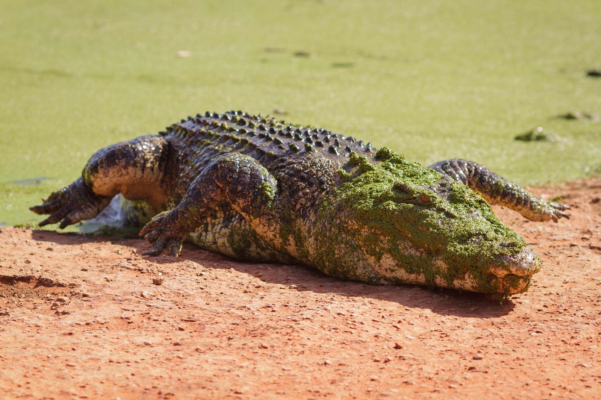 135 mm-20151222-145917-Broome Crocodile Farm.jpg