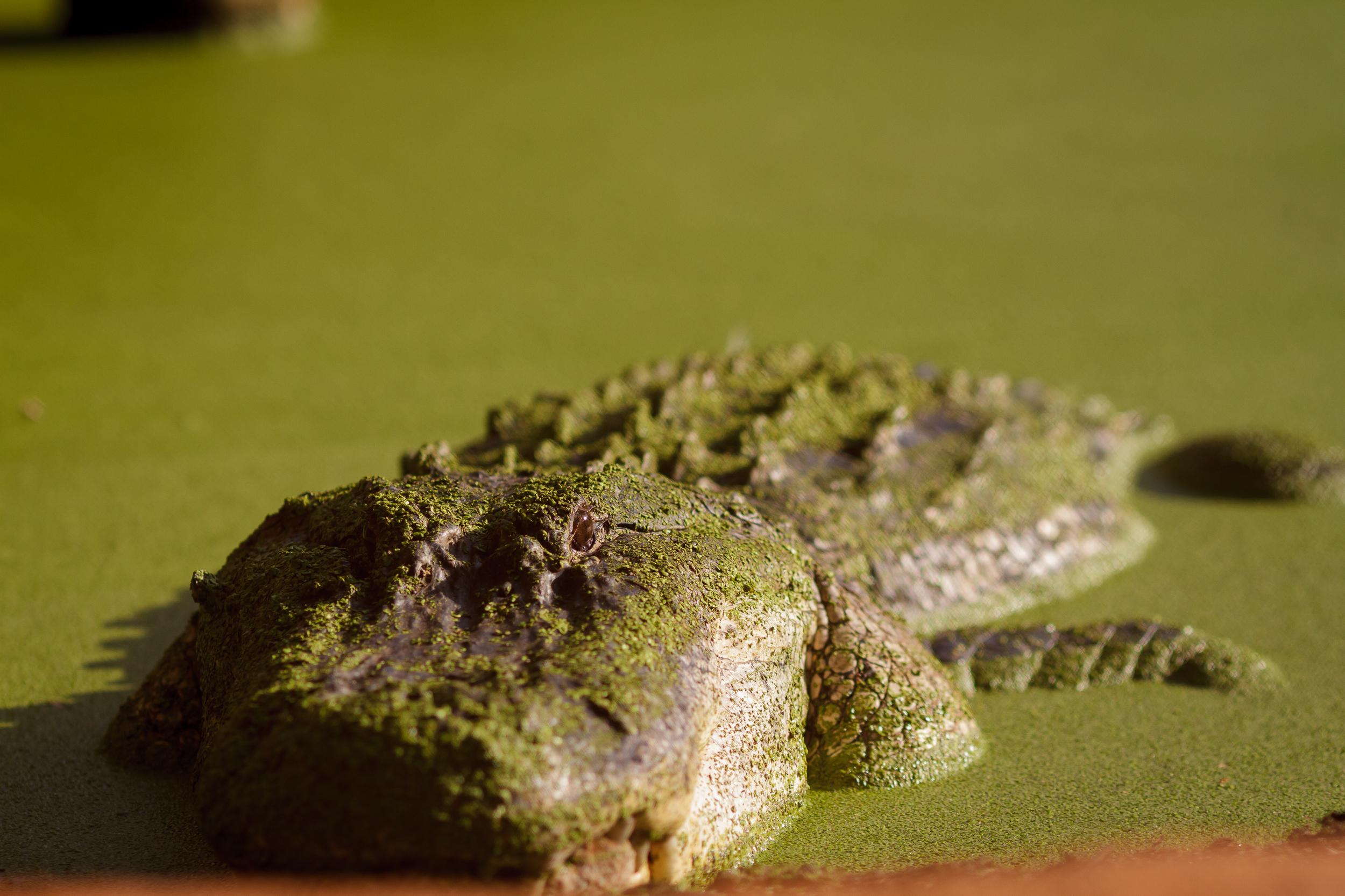 135 mm-20151222-162454-Broome Crocodile Farm.jpg