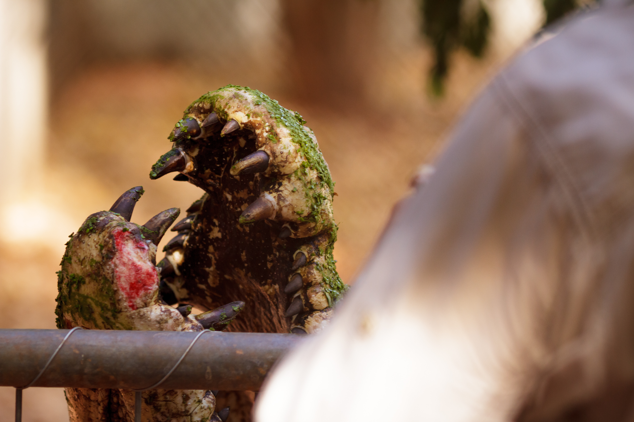 135 mm-20151222-153220-Broome Crocodile Farm.jpg