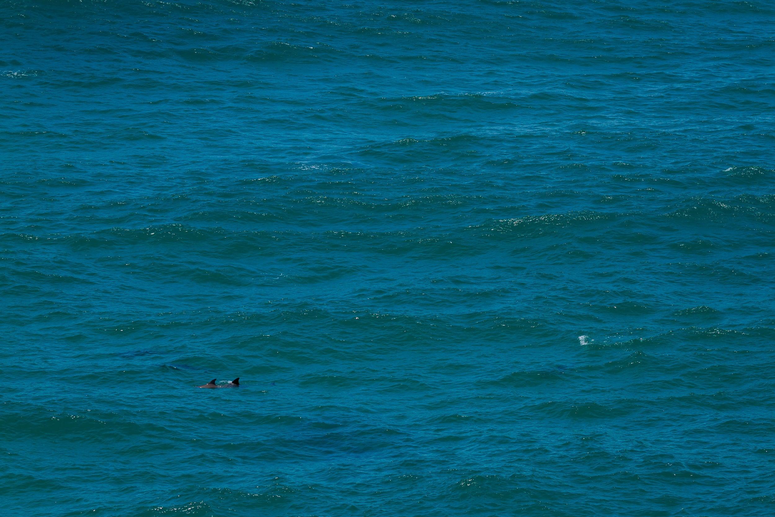 135 mm-20160104-091358-Coffs Harbour-2.jpg