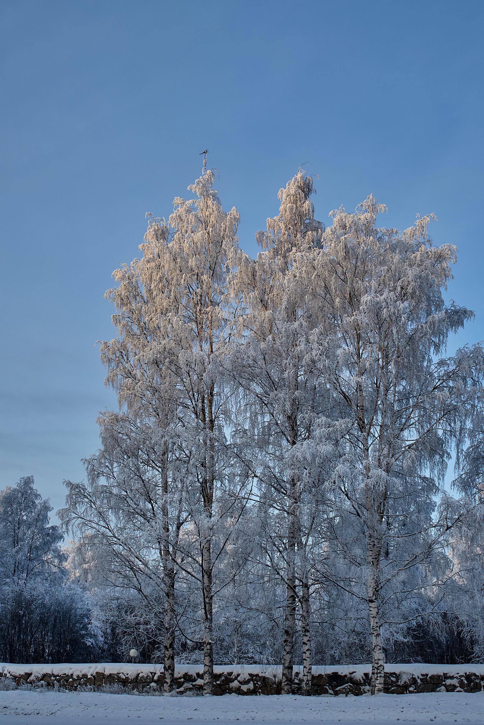 35 mm - 2019-01-24 13.20.24 - Oulu Week 4 Mix.jpg