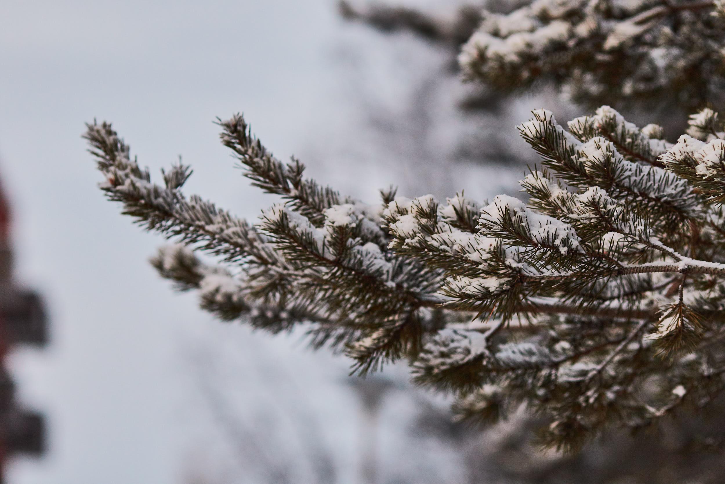 135 mm - 2019-01-18 15.17.47 - Oulu Week 3 Mix.jpg