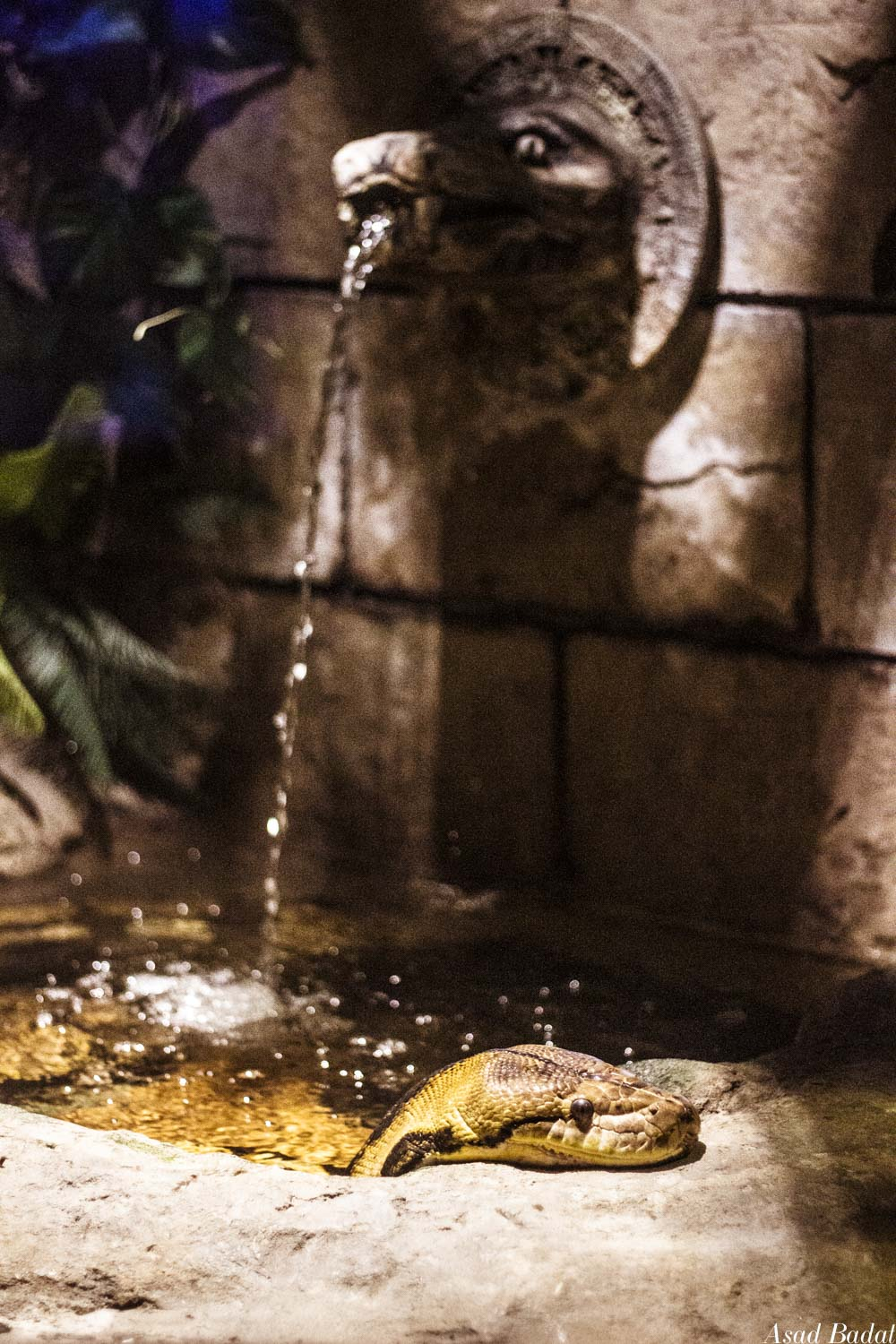 A bathing snake relaxing in a pool with a fancy spout.