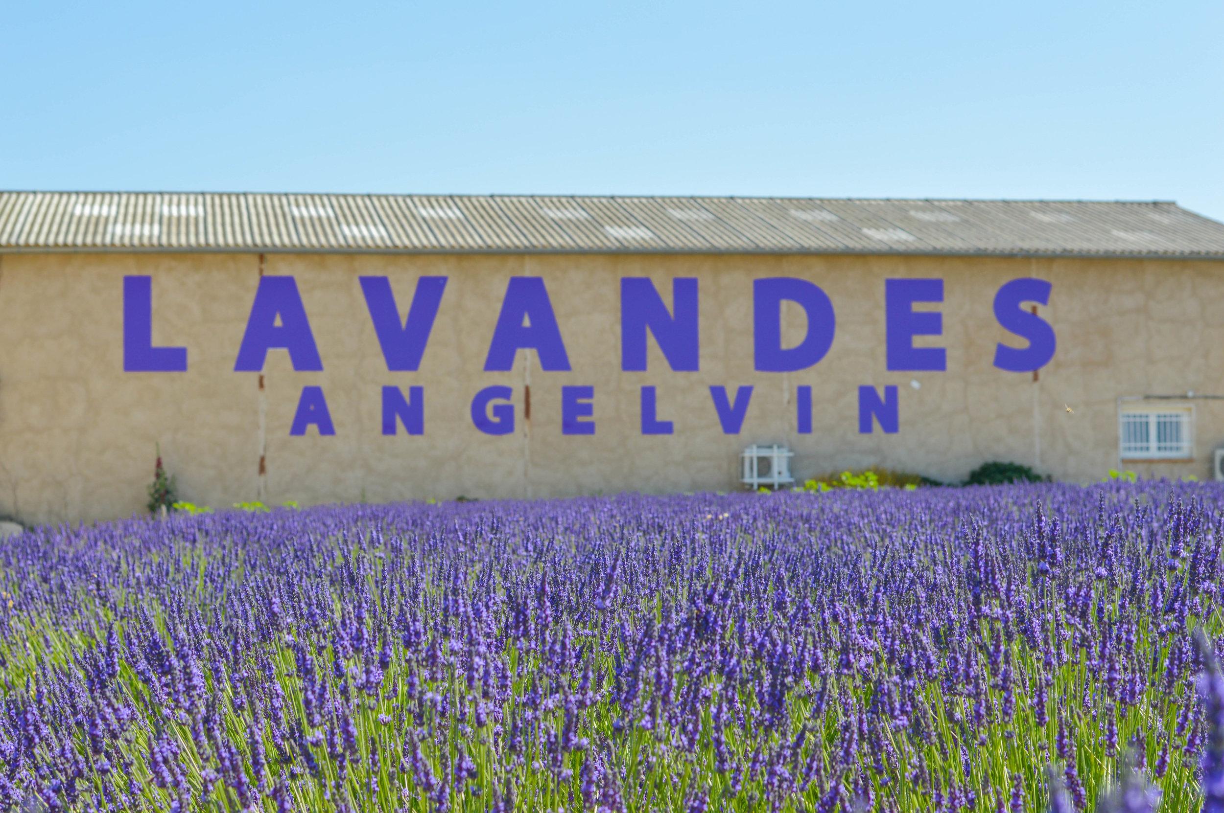 valensole lavendar fields provence france