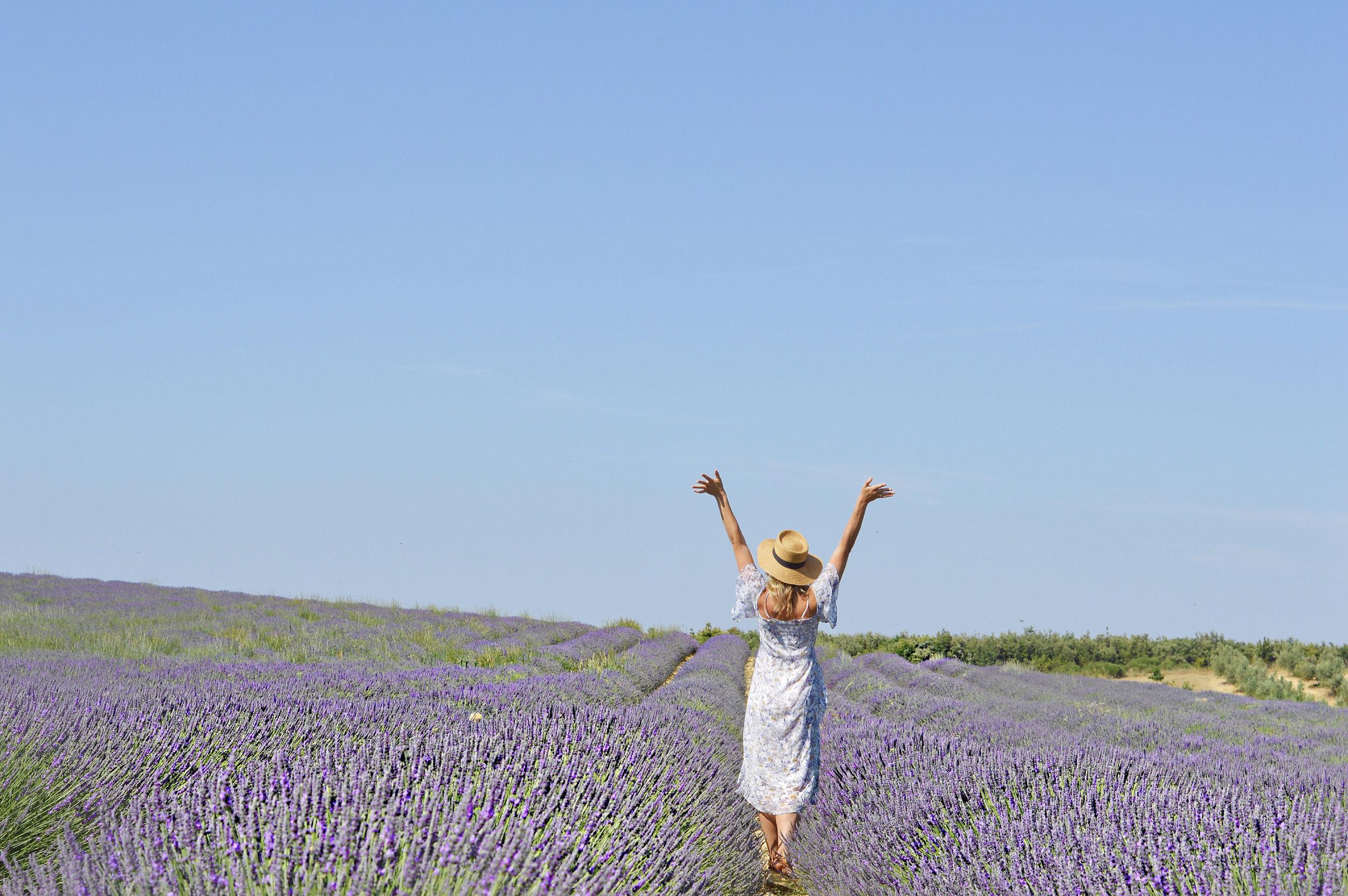 valensole lavendar fields