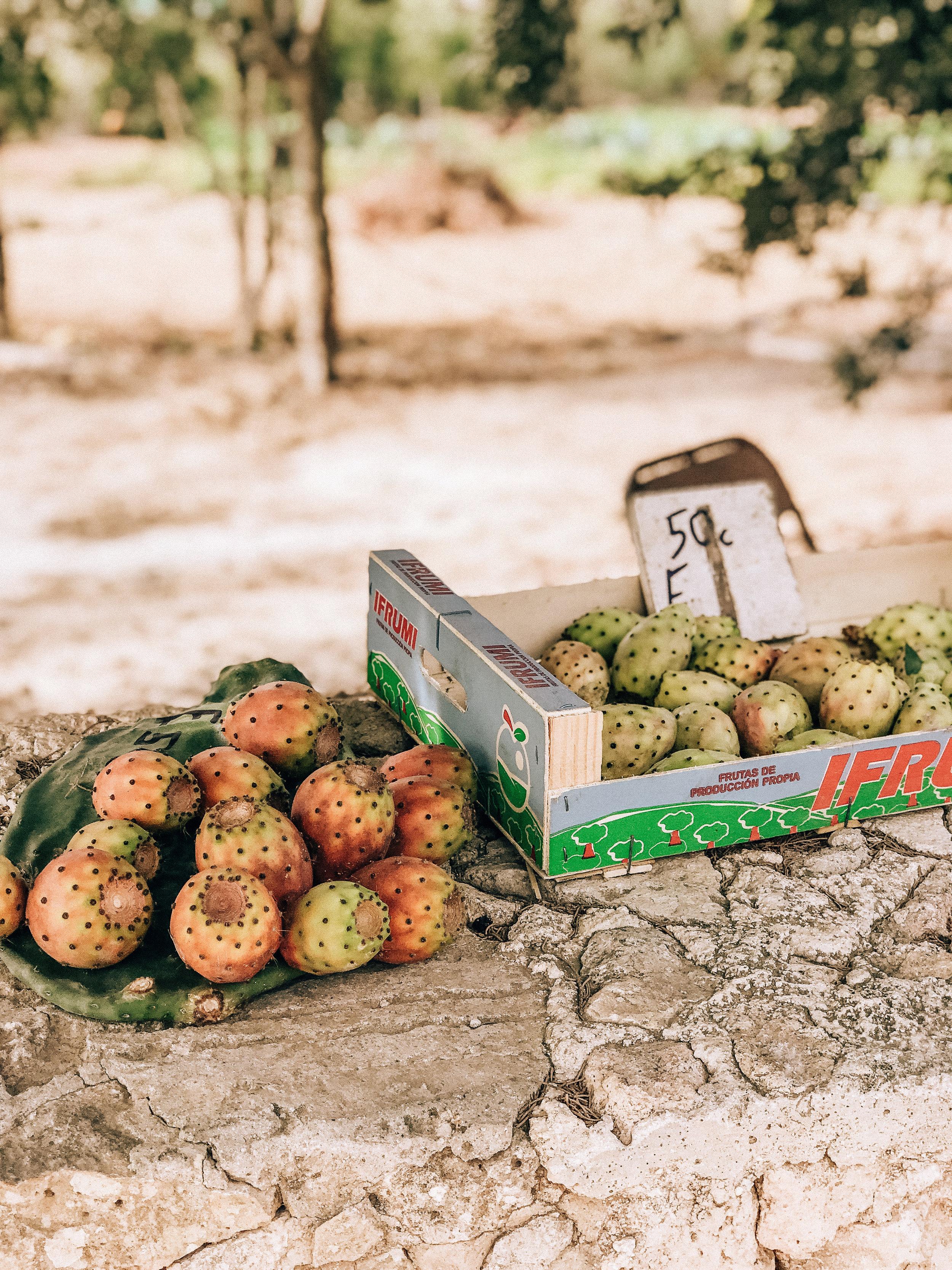 malta prickly pear