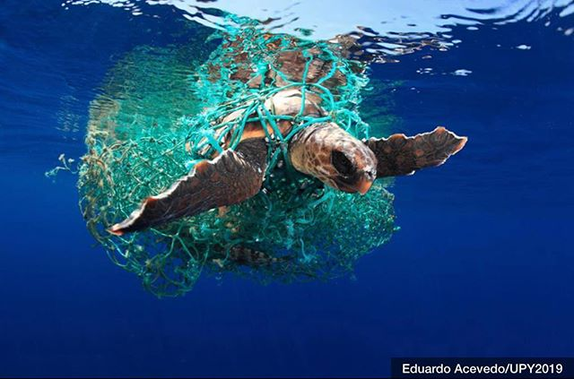 HUMANS:  WE MUST DO BETTER! * Eduardo Acevedo, from Tenerife, was named Marine Conservation Photographer of the Year 2019 for his stunning photo showing a loggerhead turtle entangled in a discarded plastic fishing net.