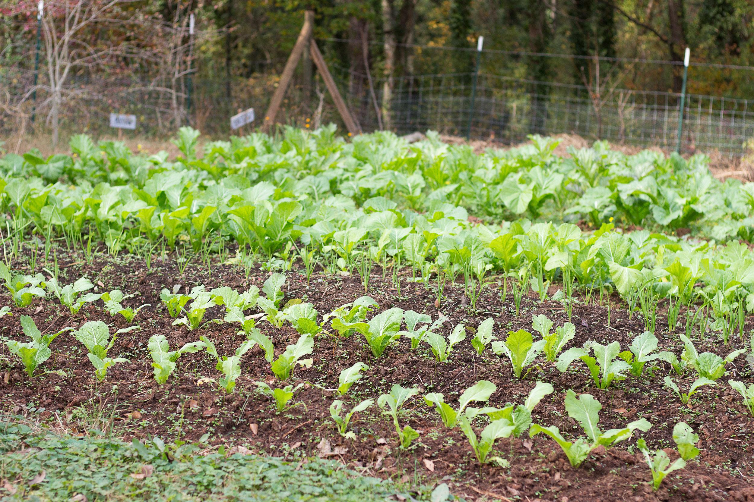 Decatur's Kitchen Garden -
