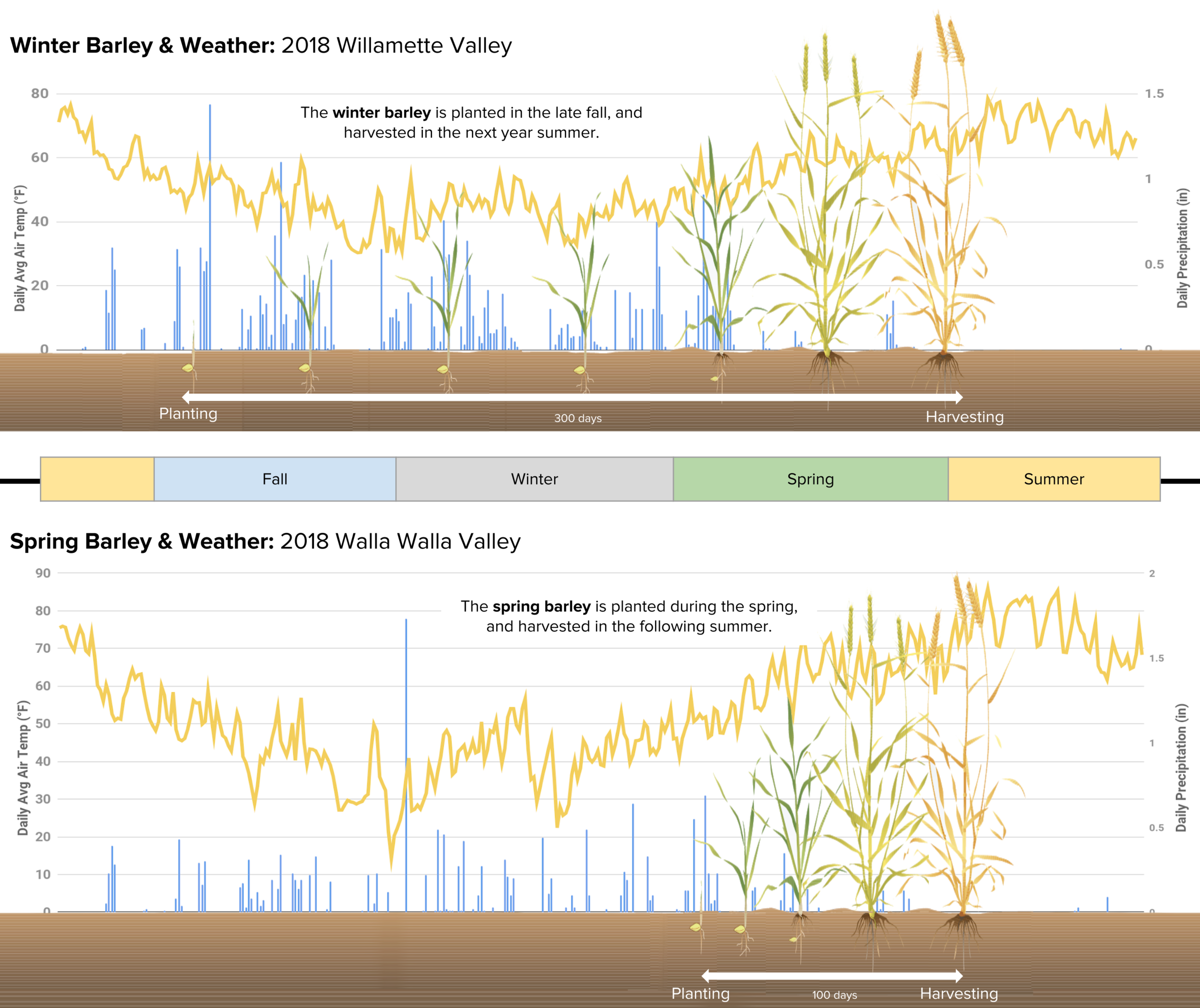 Comparaison-Winter-and-Spring-Barley.png