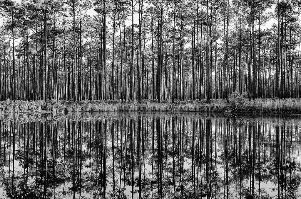 Swamp-Reflections-#3_Vangrov.jpg