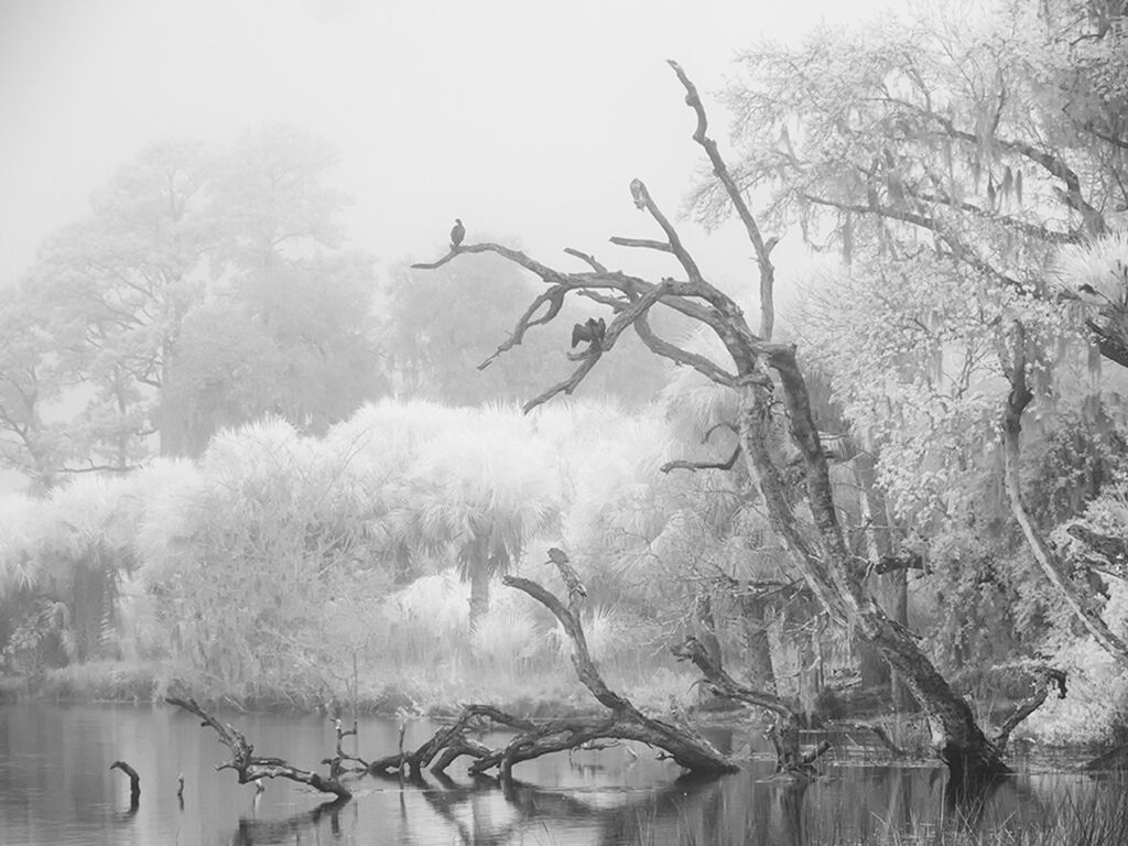 "Jan Kapoor, ""Morning Fog, Ossabaw"""