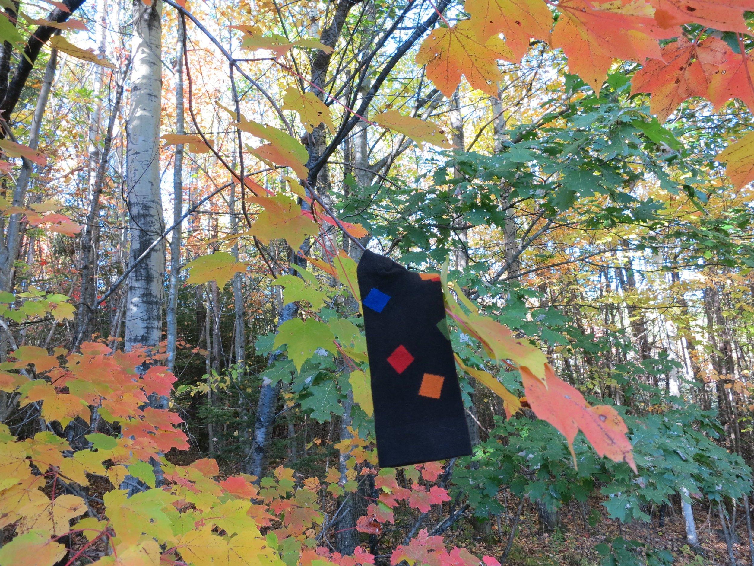 CONFETTI amid the leaves
