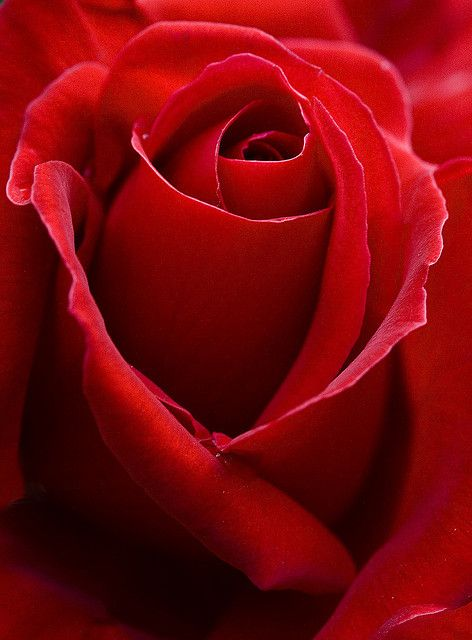 Rosa Roja by Dani3D via bestphotsworld.com