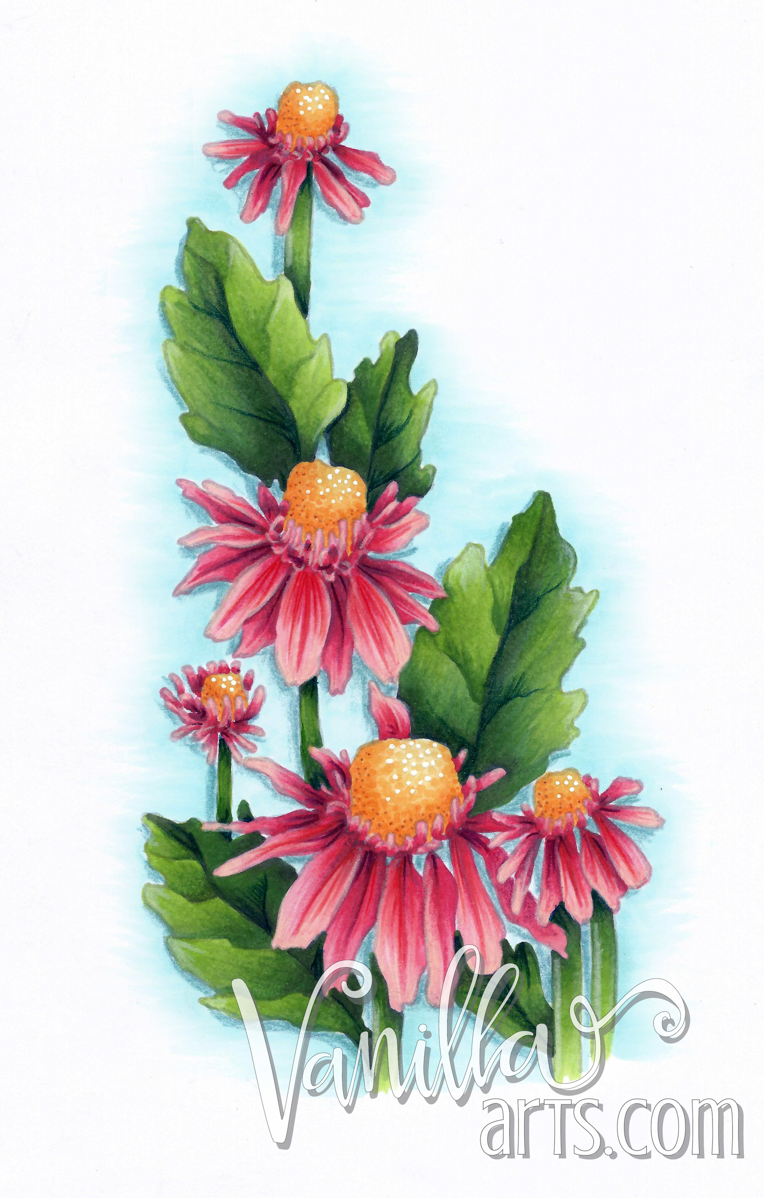 "September's Copic Club Lesson ""Crazy for Daisies"" 