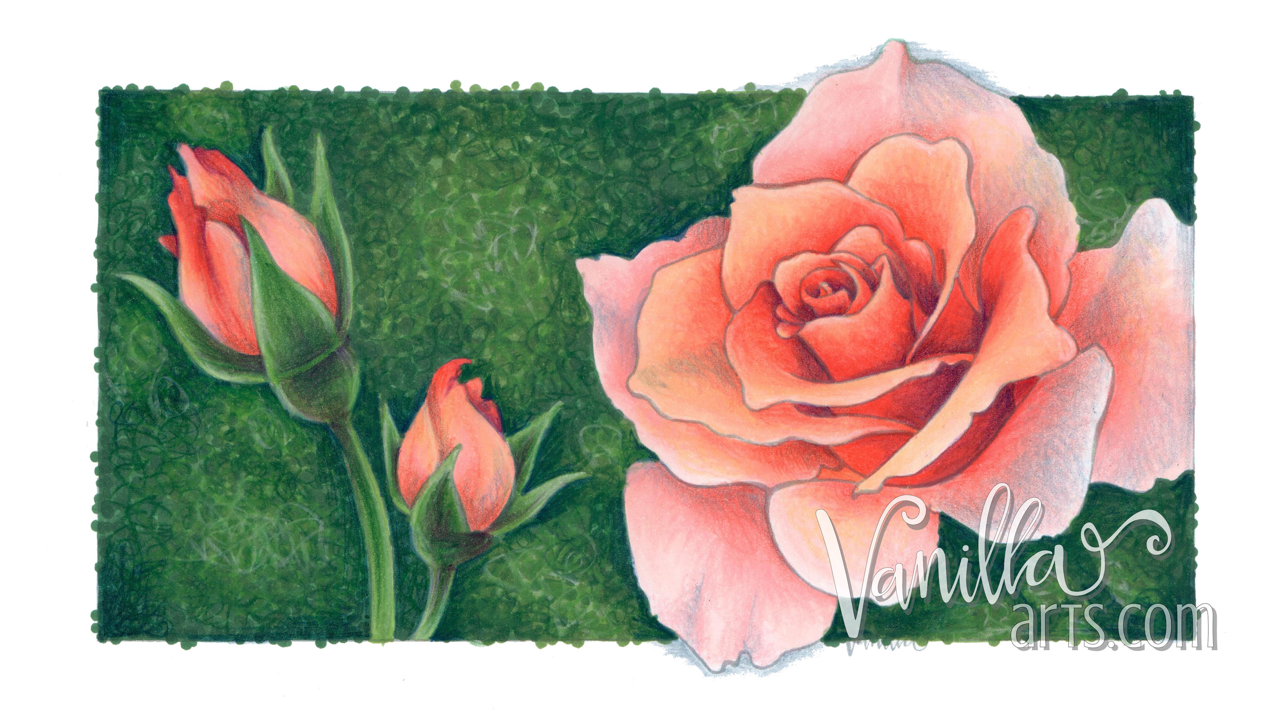 """""""Peach Rose"""" by Vanilla Arts Co for advanced Copic lessons 