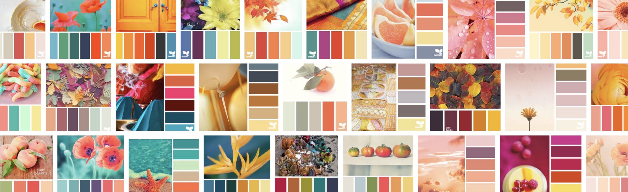 design seeds orange.jpeg