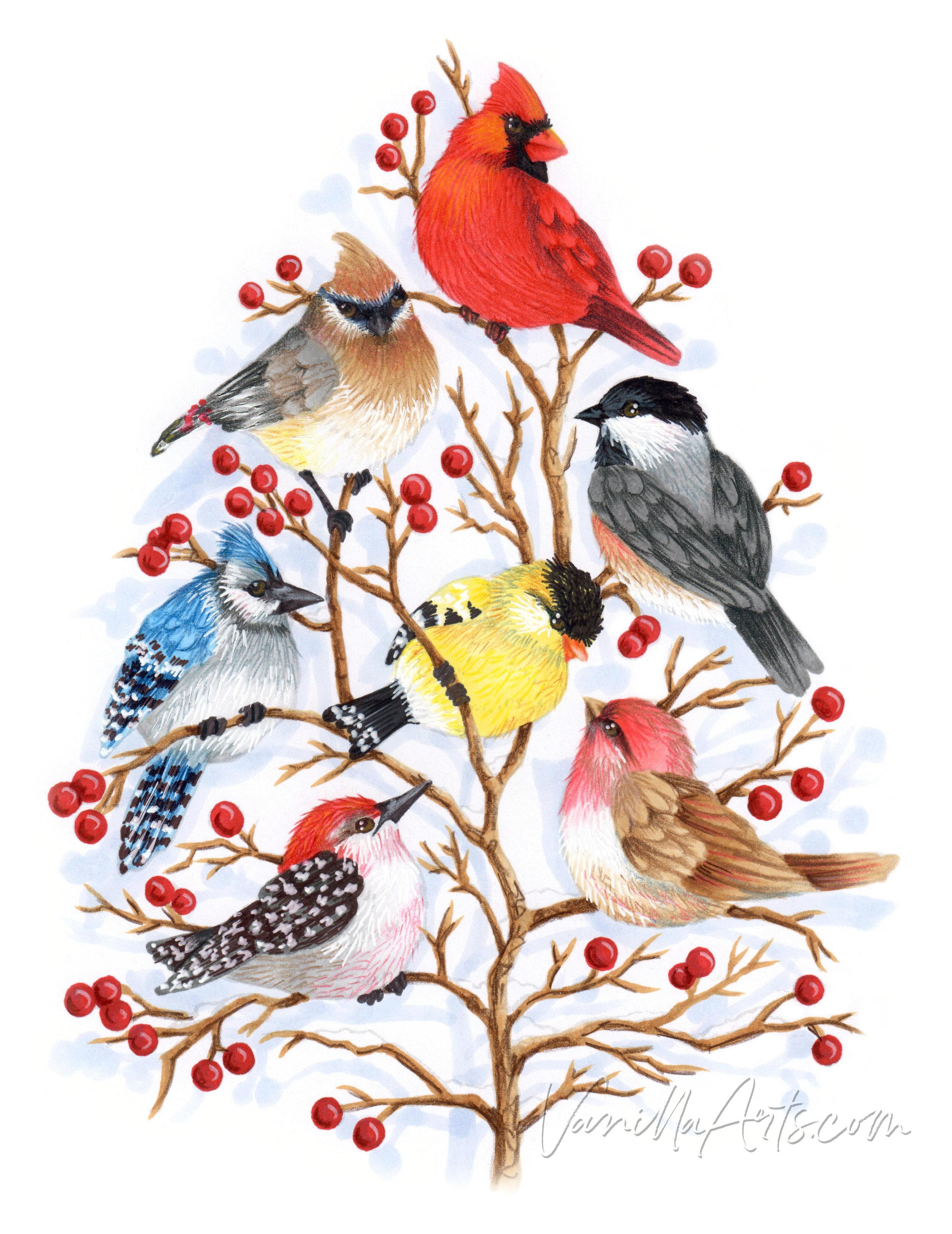 November 2018: Feathery texture for birds