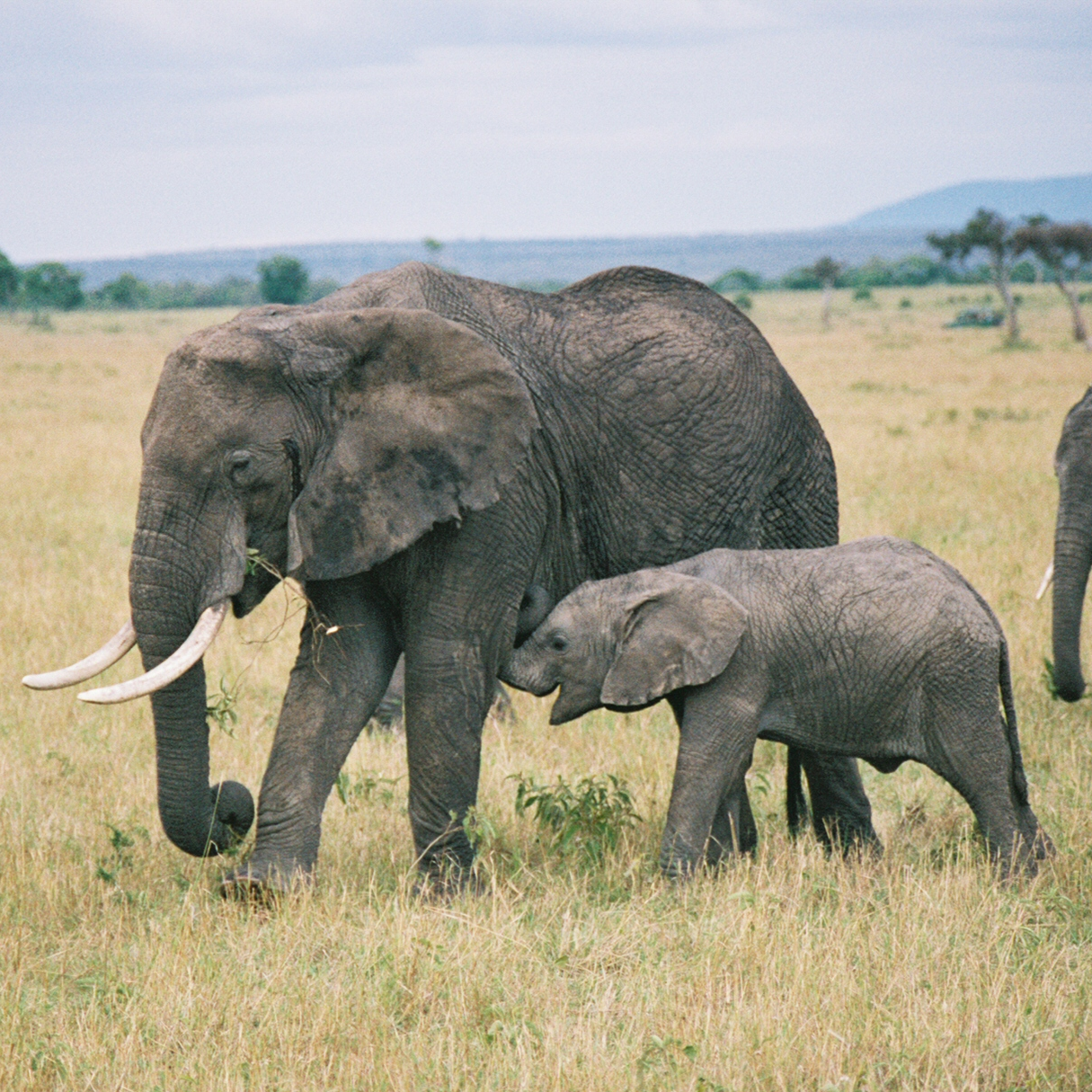 Go on an exciting two-day safari with the Vice Chancellor of Daystar!