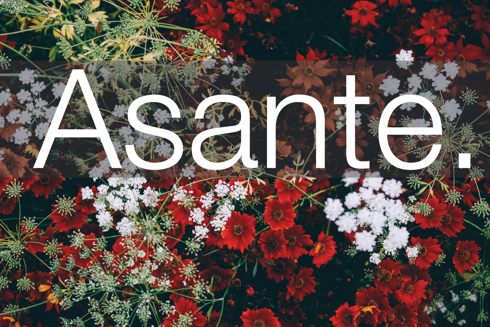 Asante is Swahili for Thank you