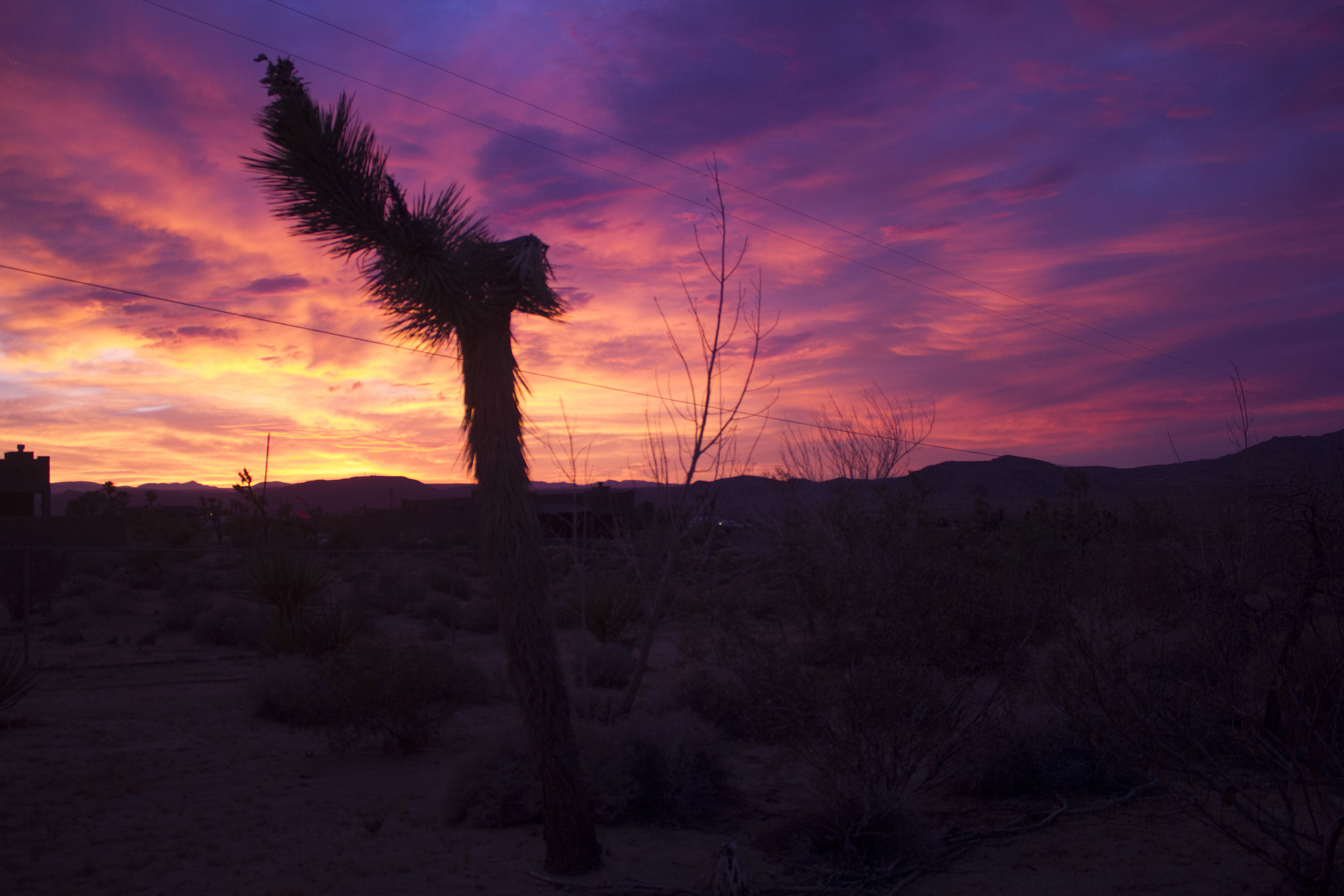 Joshua Tree sunset....ahhh...yeah....