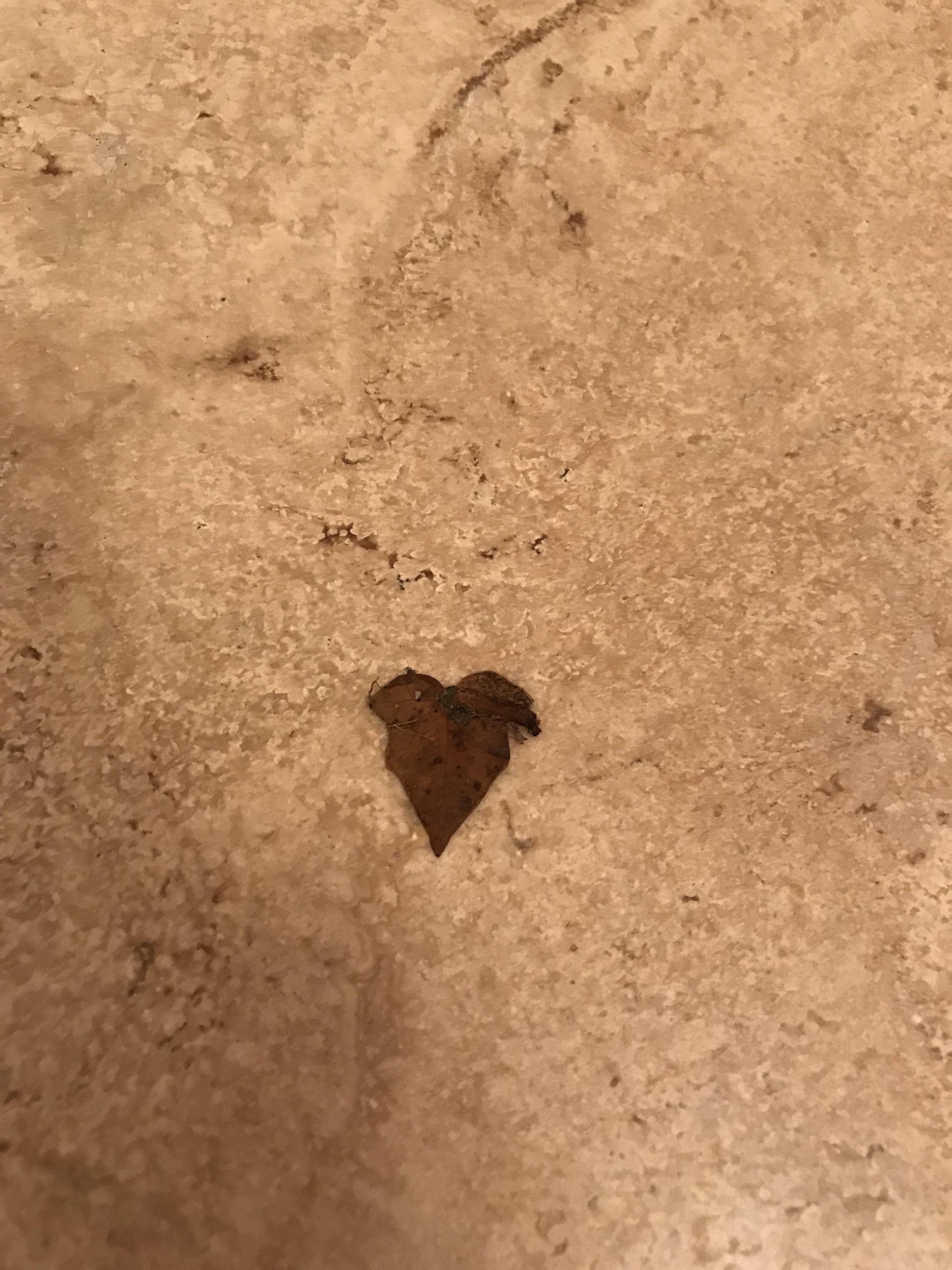 heart saturday blog leaf.jpg