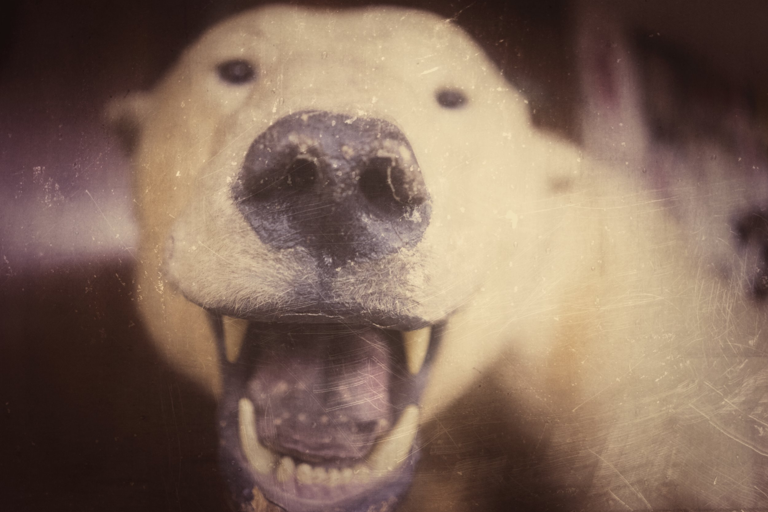 Polar Bear posing for a cameo when I was speaking at the Adventurers' Club of Los Angeles.