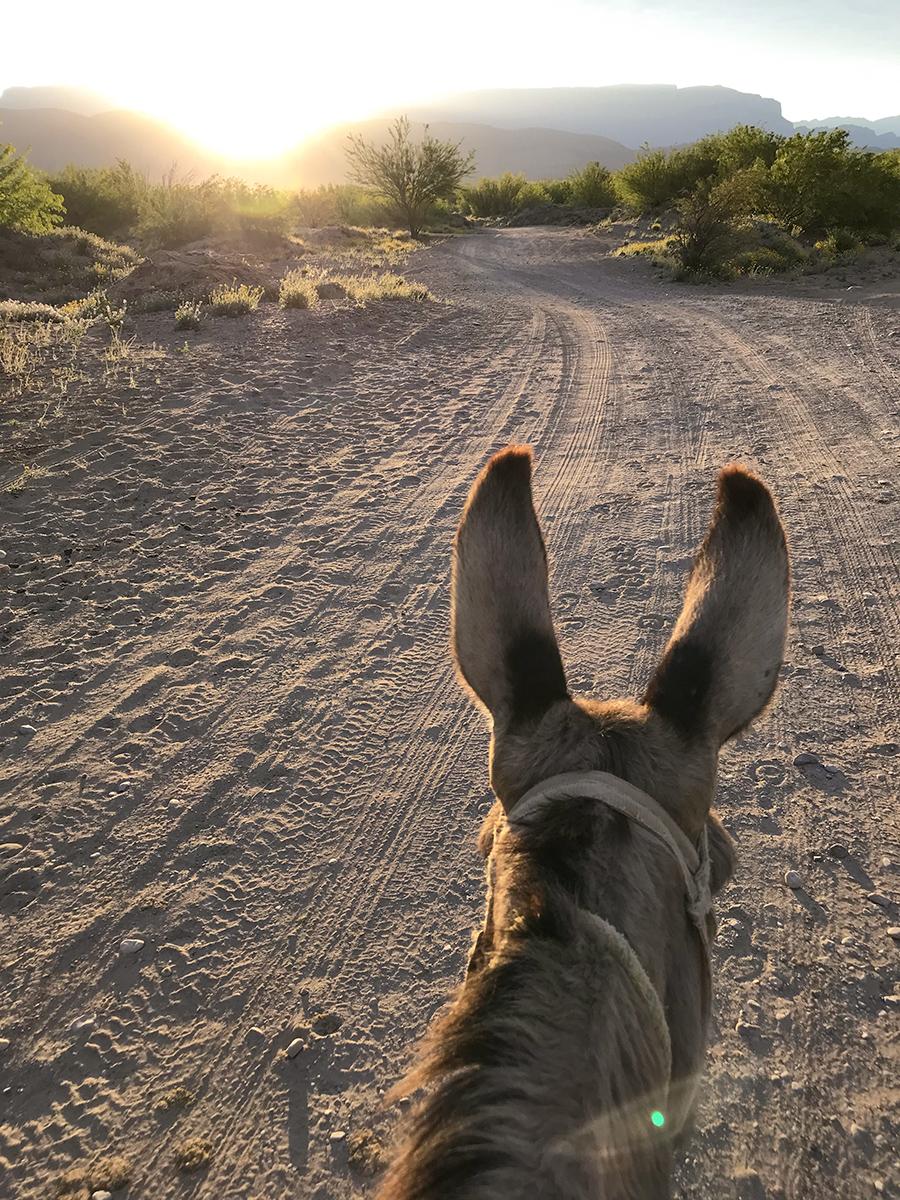 donkey sm webphoto.jpg