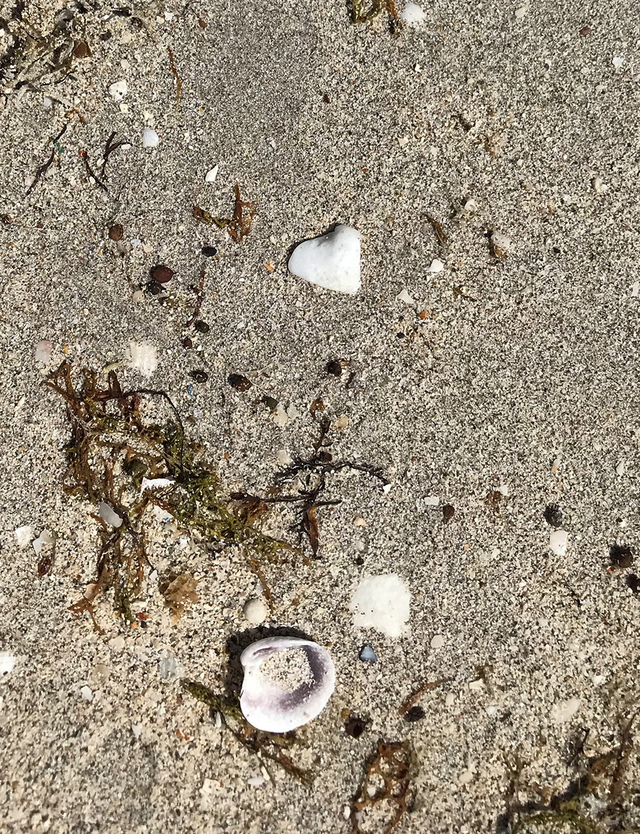 shells have hearts too!