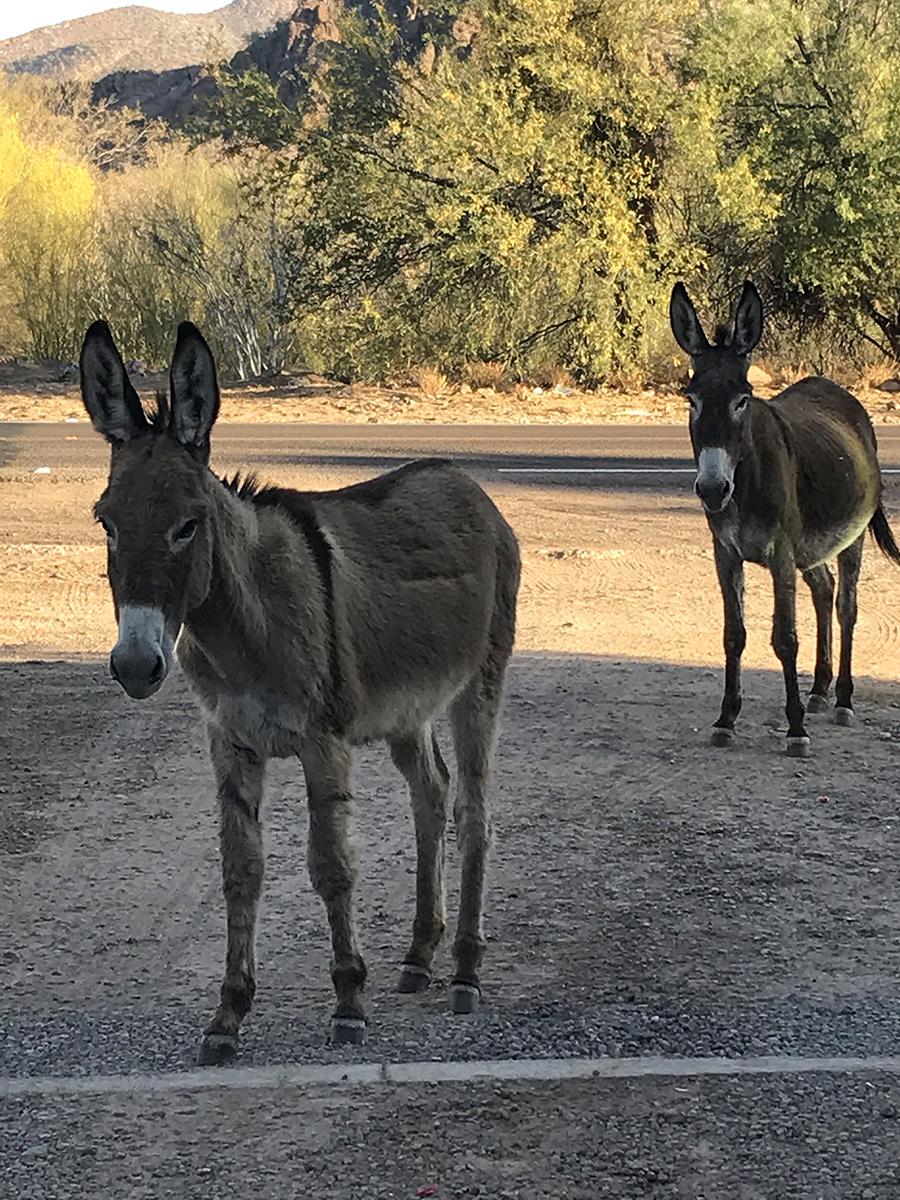 hotel donkeys websize.jpg