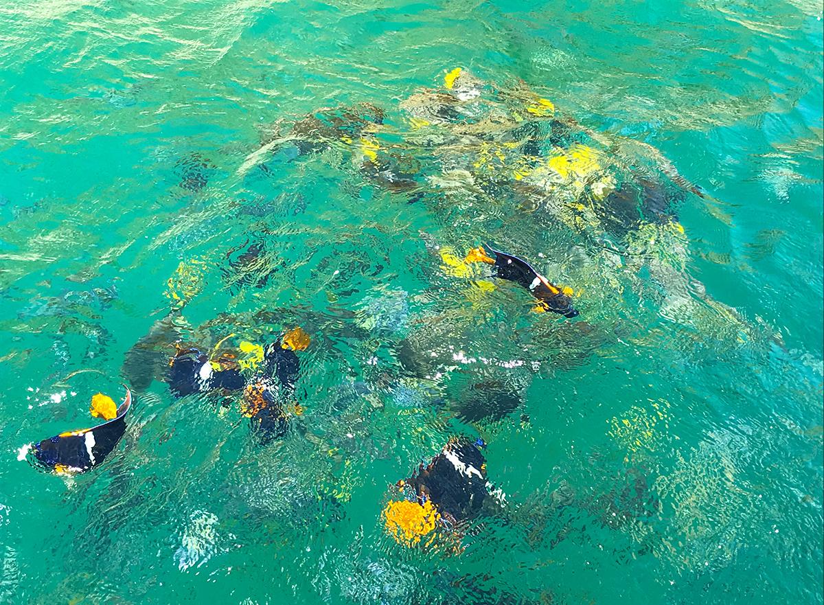 Cabo Fish websize.jpg