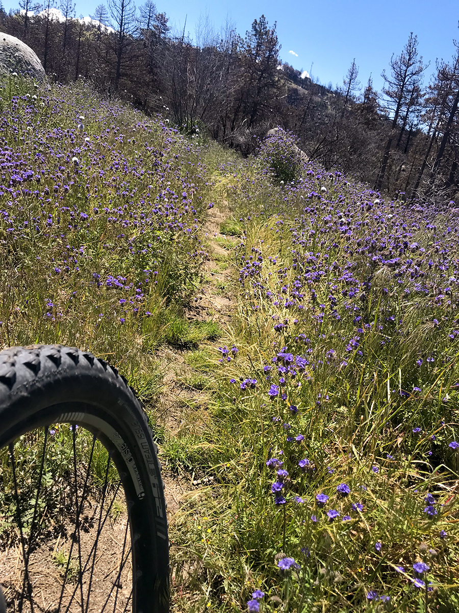 Skidmark loves getting rad with the spring wildflowers and granite rocks in the mountains! And so do I!