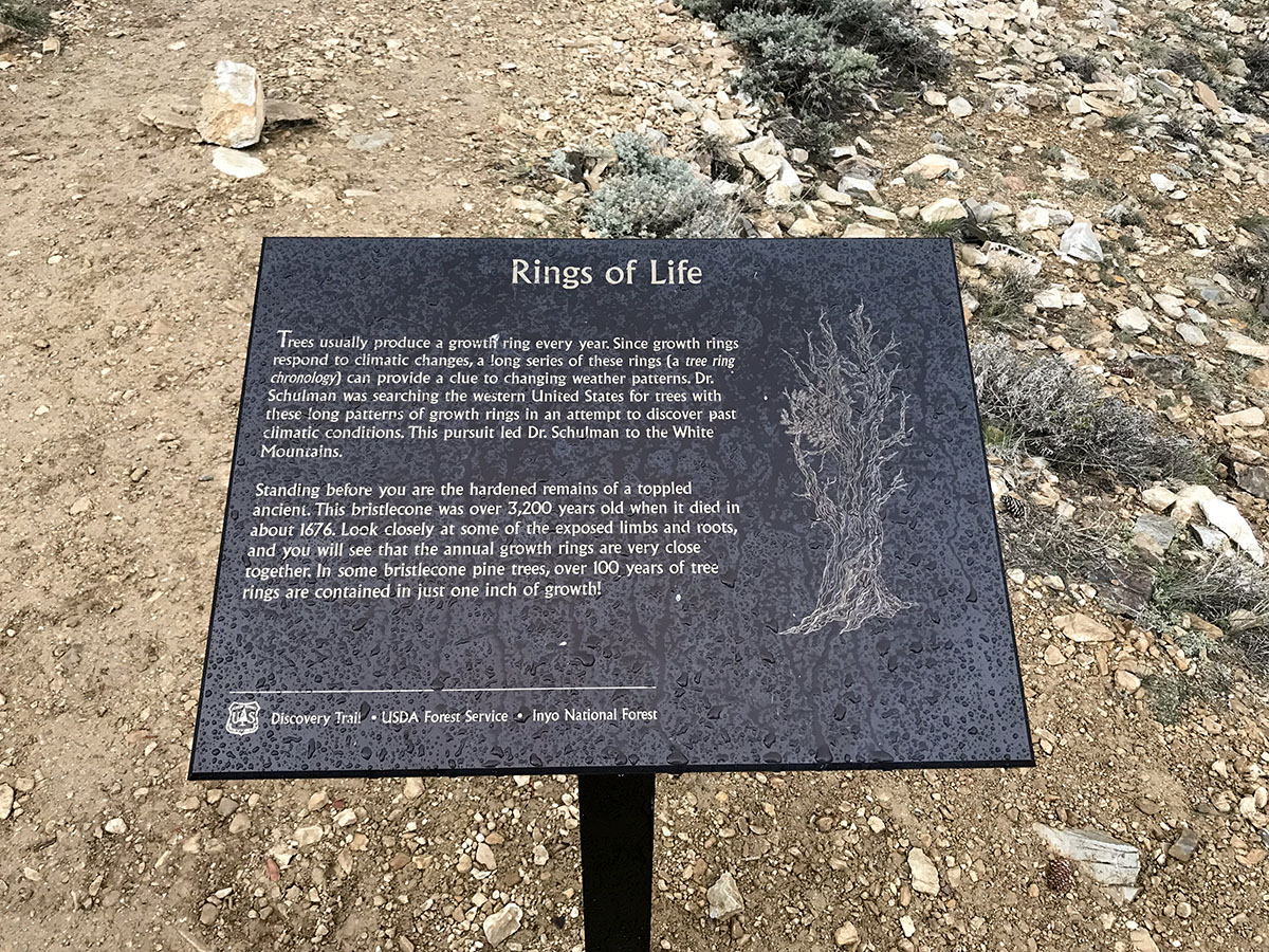 """Plaque """"Rings of Life"""" about the ancient Bristlecone Trees."""