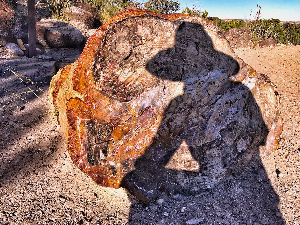 I had a BLAST exploring Escalante Petrified Forest State Park, mix of my 2 favs: trees and rocks!