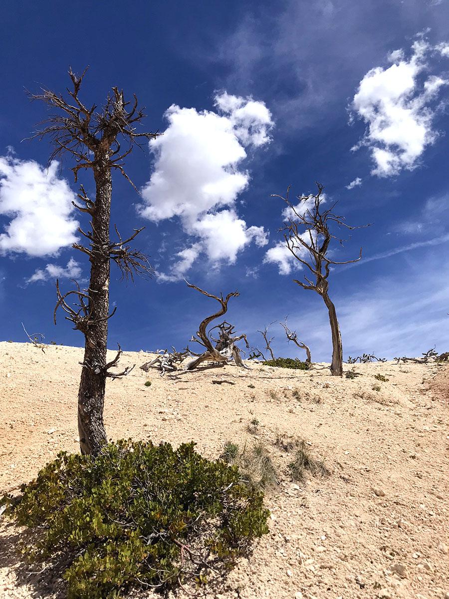 bryce hike trees websize.jpg