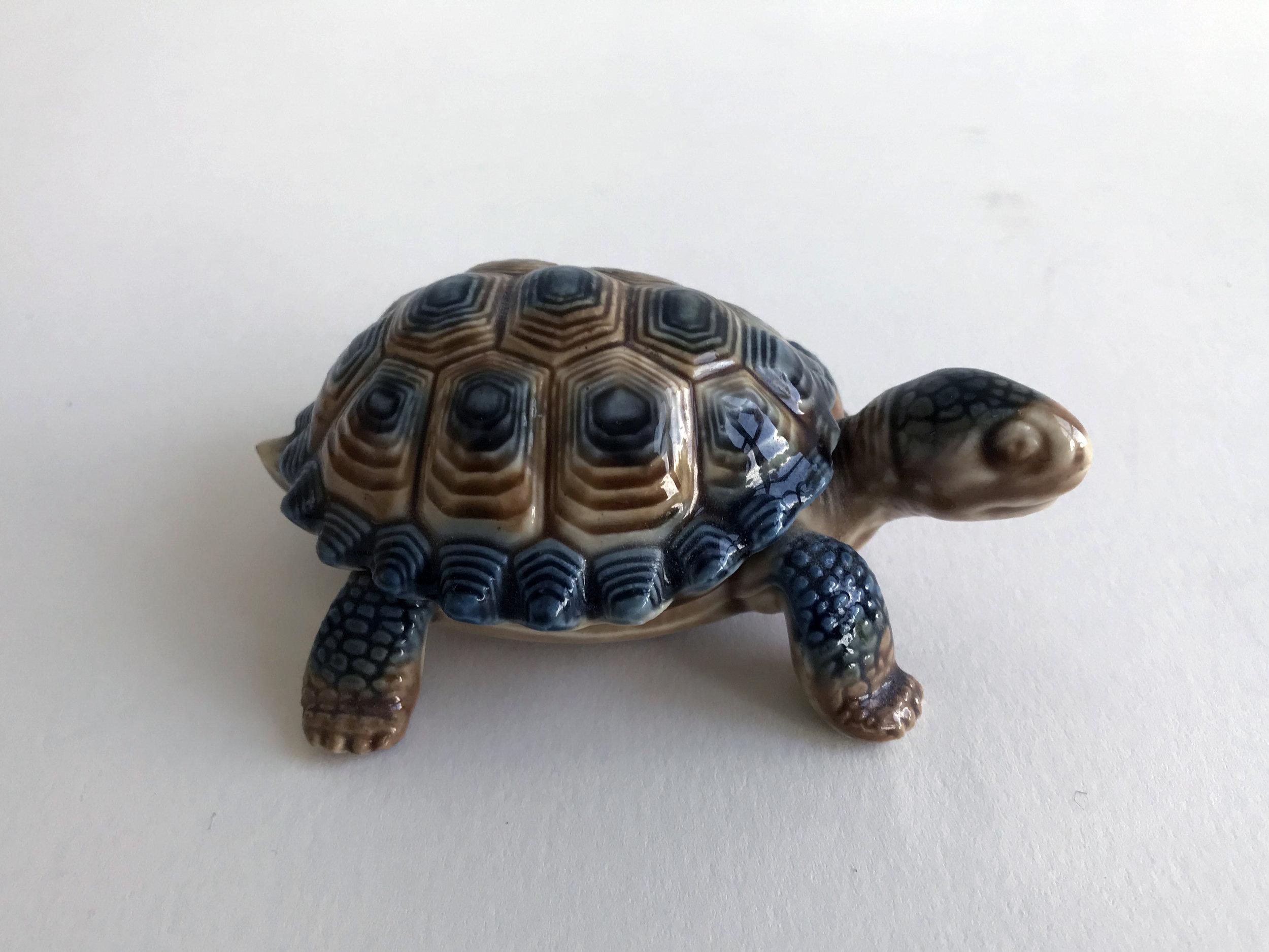 1 turtle.jpg