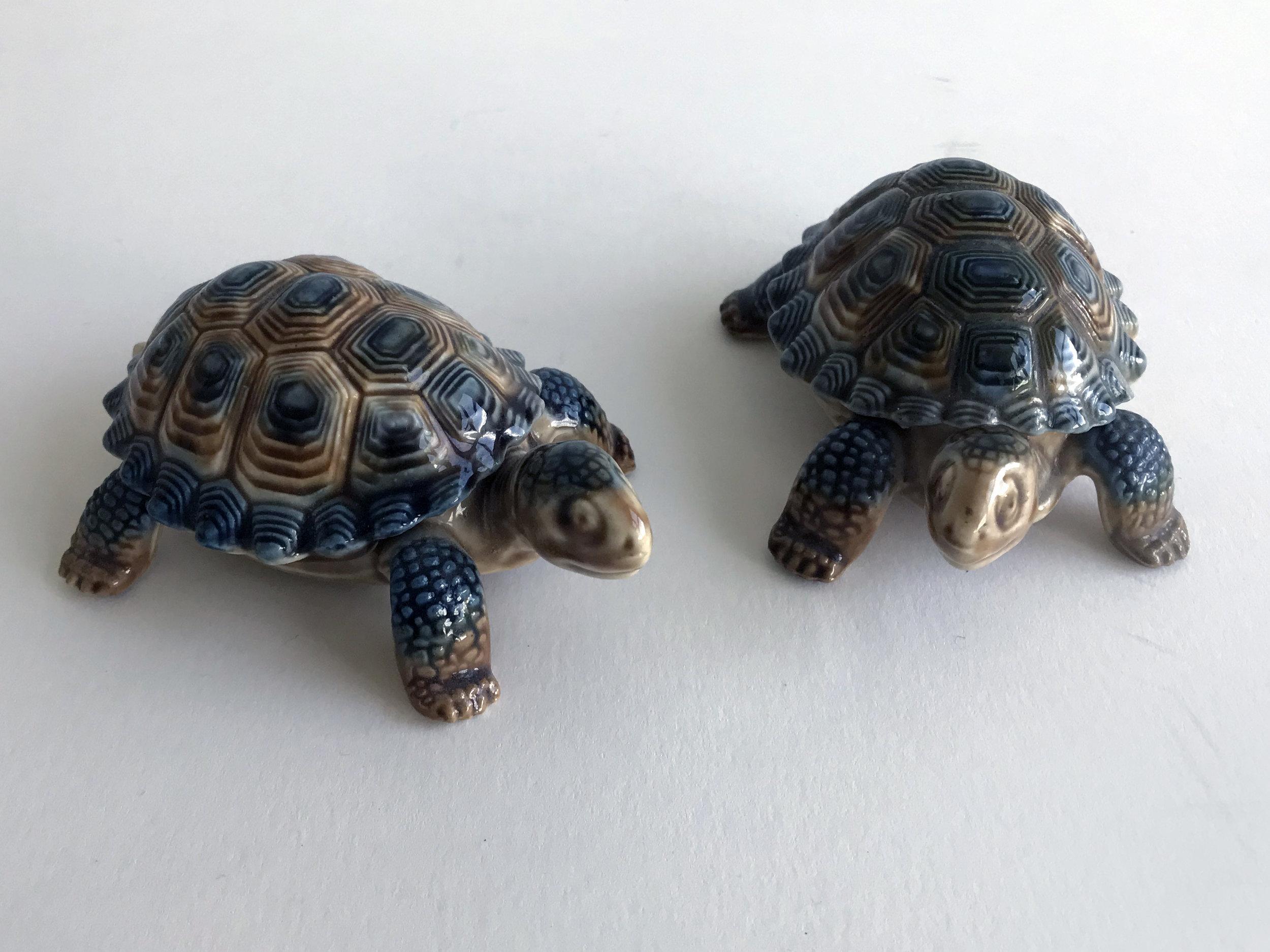 2 turtles.jpg