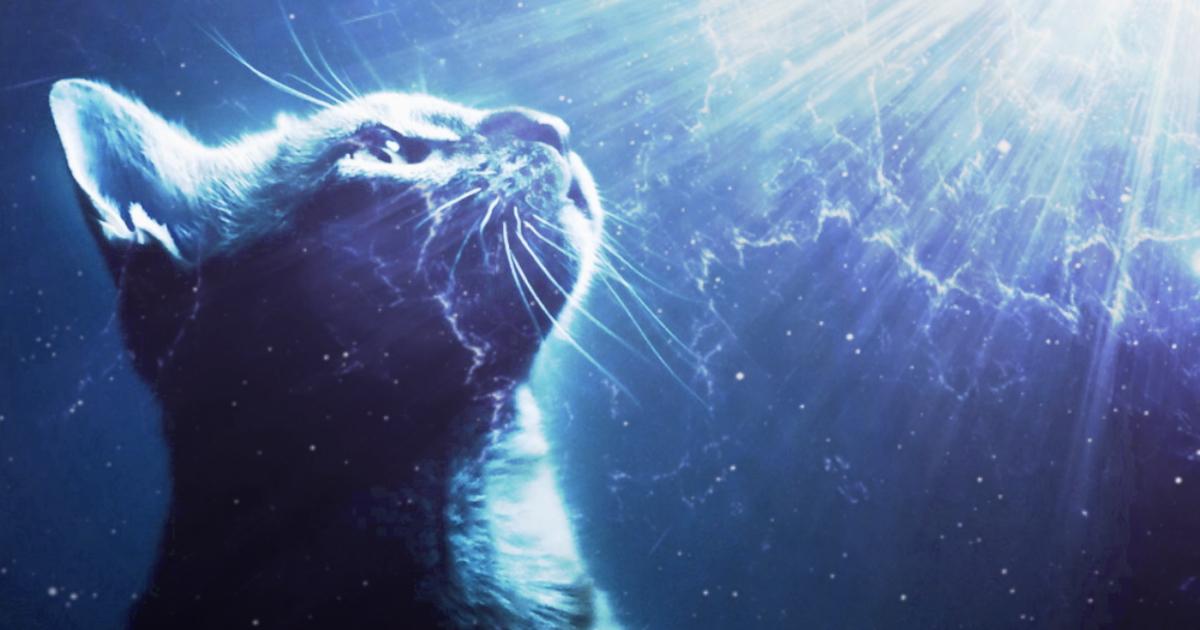 quantum cat.jpg