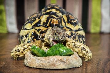 I dream of zucchini.