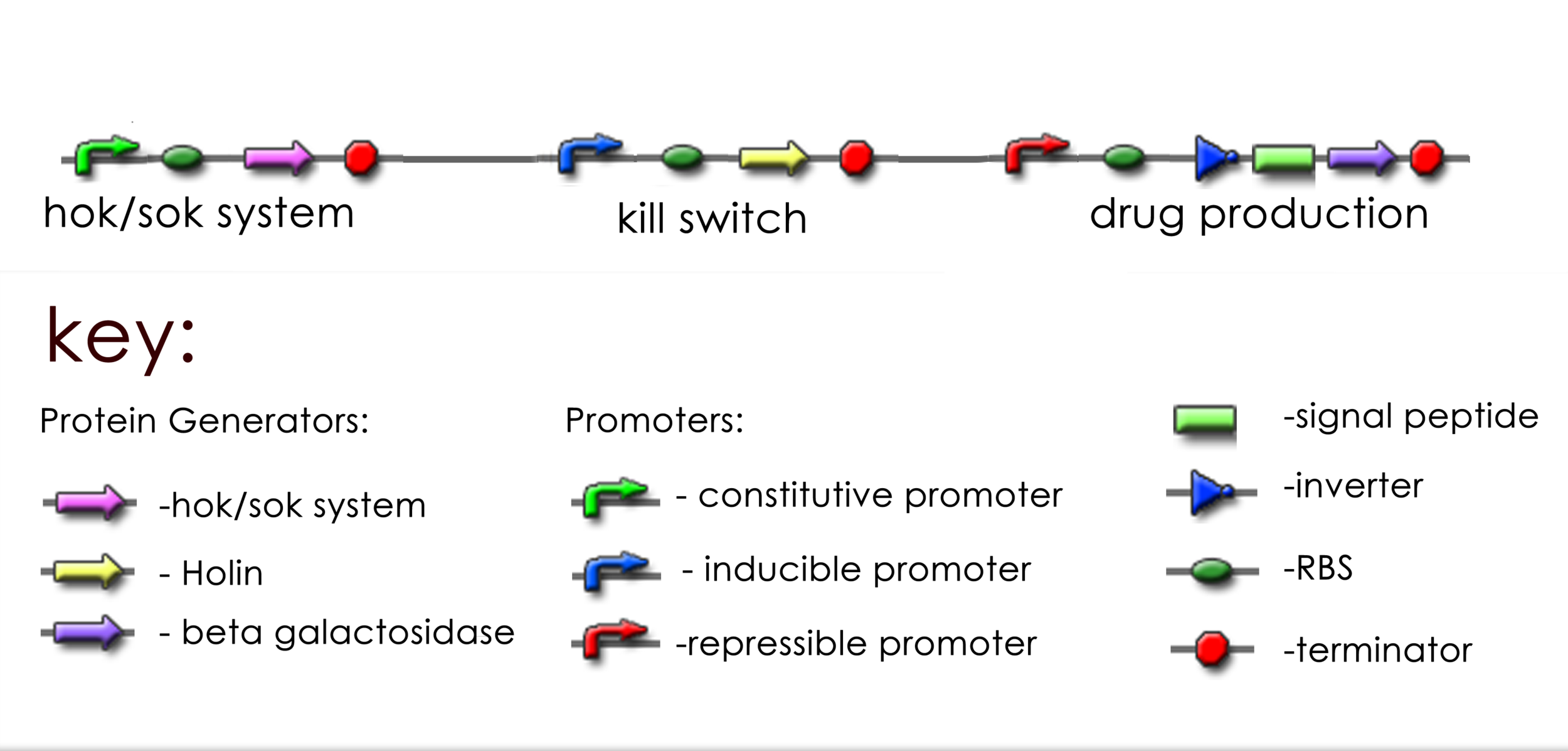 An example of the Biobrick symbols and construct design. Source