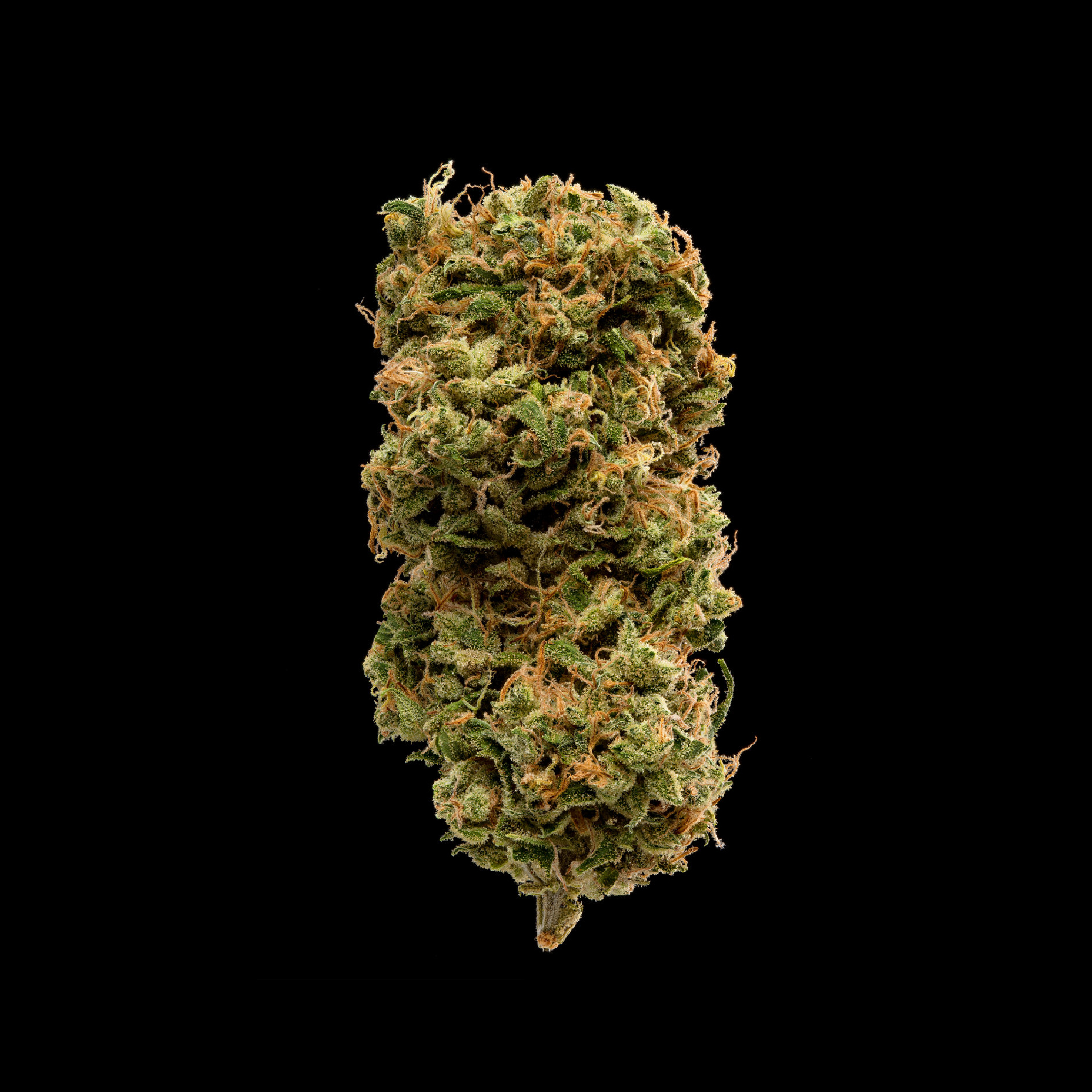RED CONGOLESE - A sweet musky aroma heralds the unique old world genetics found in Red Congo. This African landrace sativa will send your soaring to new heights.