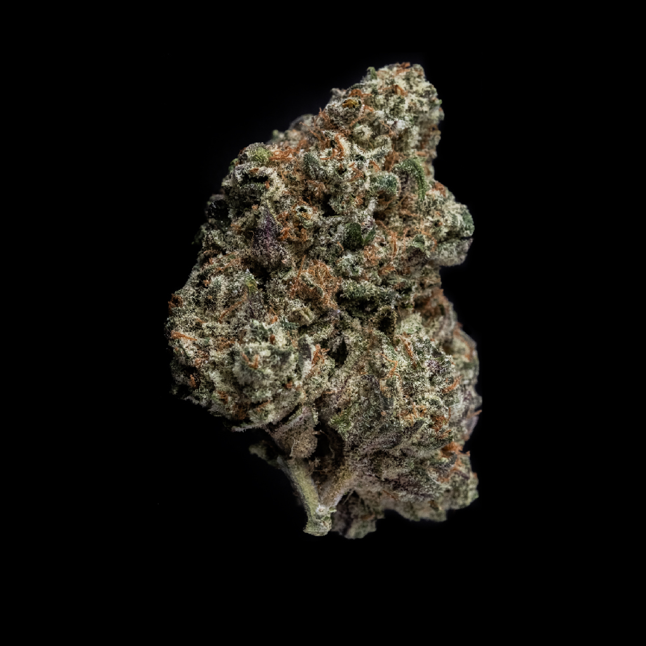 CHERRY CHEESECAKE - A mouth-watering indica with an equally potent smell. Gold Seal's cross of Kimbo Kush and Cherry Pie presents smokers with a satisfying, decadent flavor and a lasting, euphoric high.