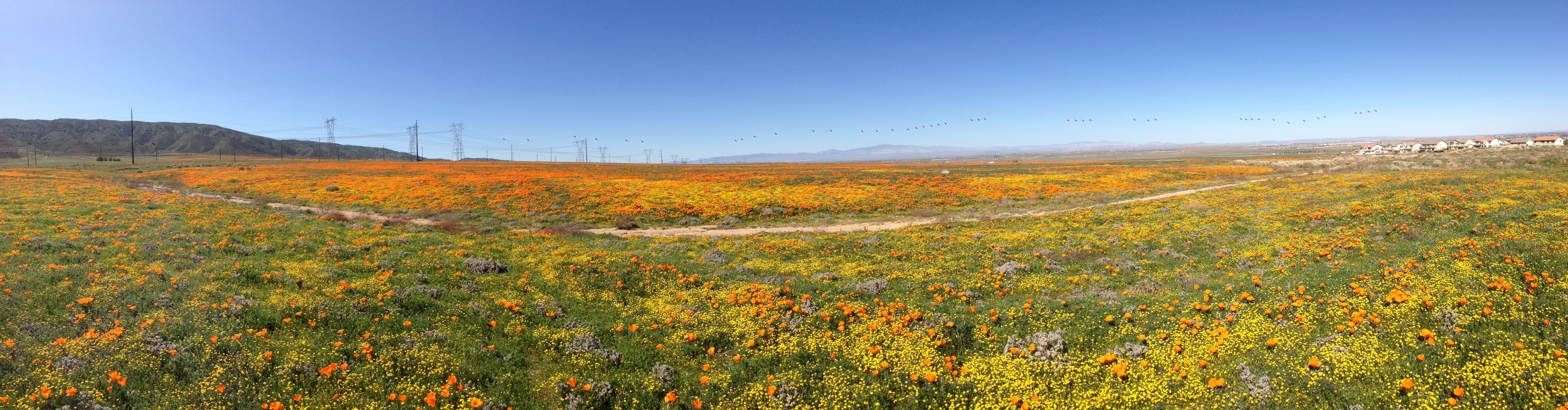 In the fields of Lancaster, CA