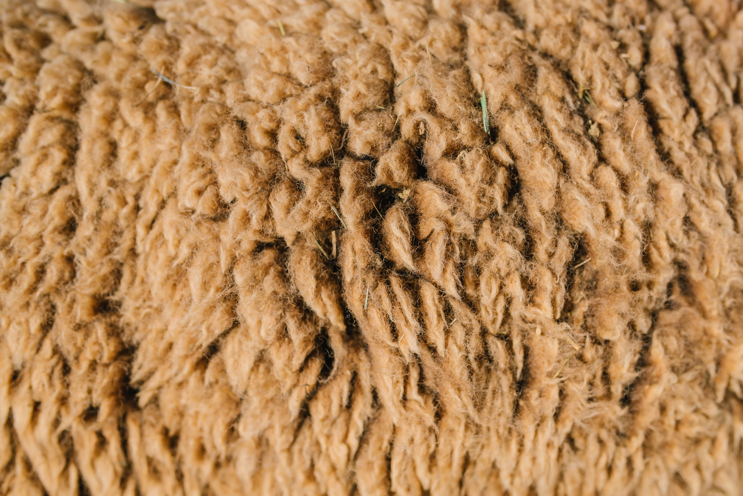 raw-fiber-csa-raw-wool-fiber-colorad-small-acre-farm