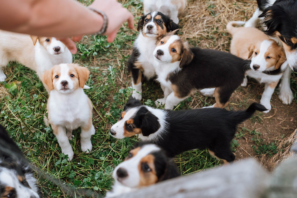 Tilly's 2015 Litter