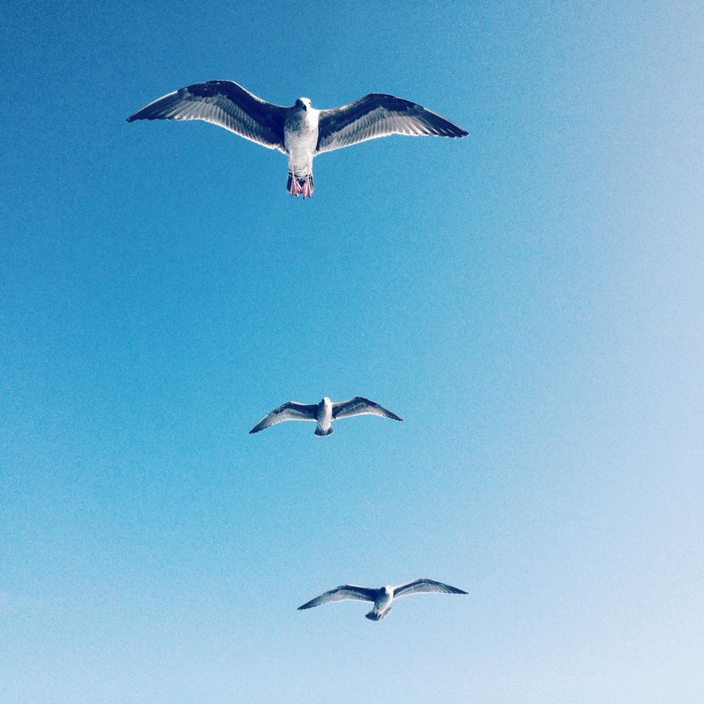 sallyannfield_iPhone-9.jpg