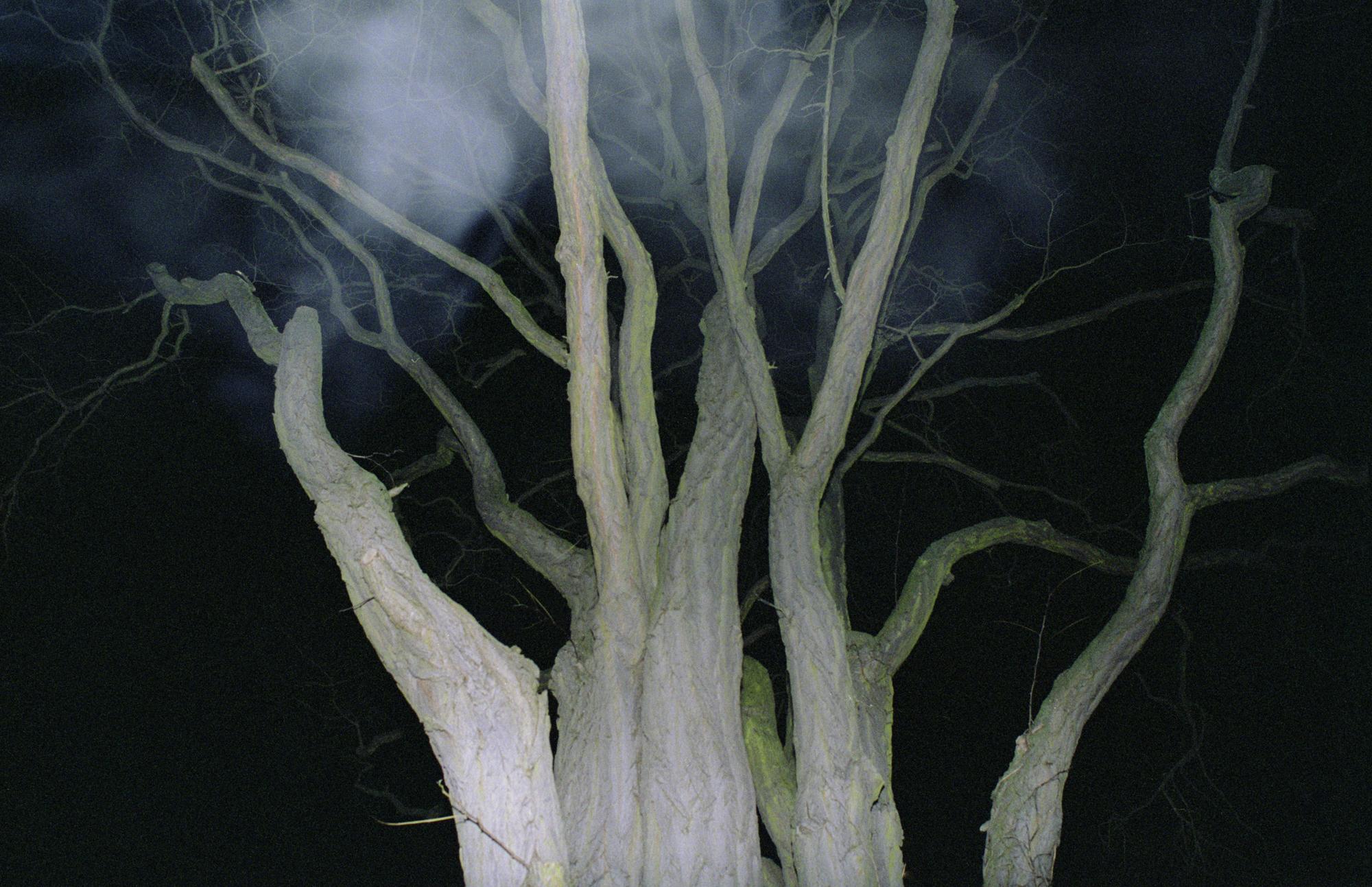tree1small.jpg
