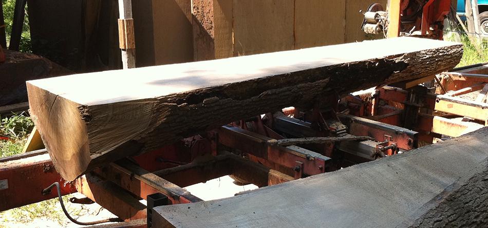 An oak log leveled on the saw mill