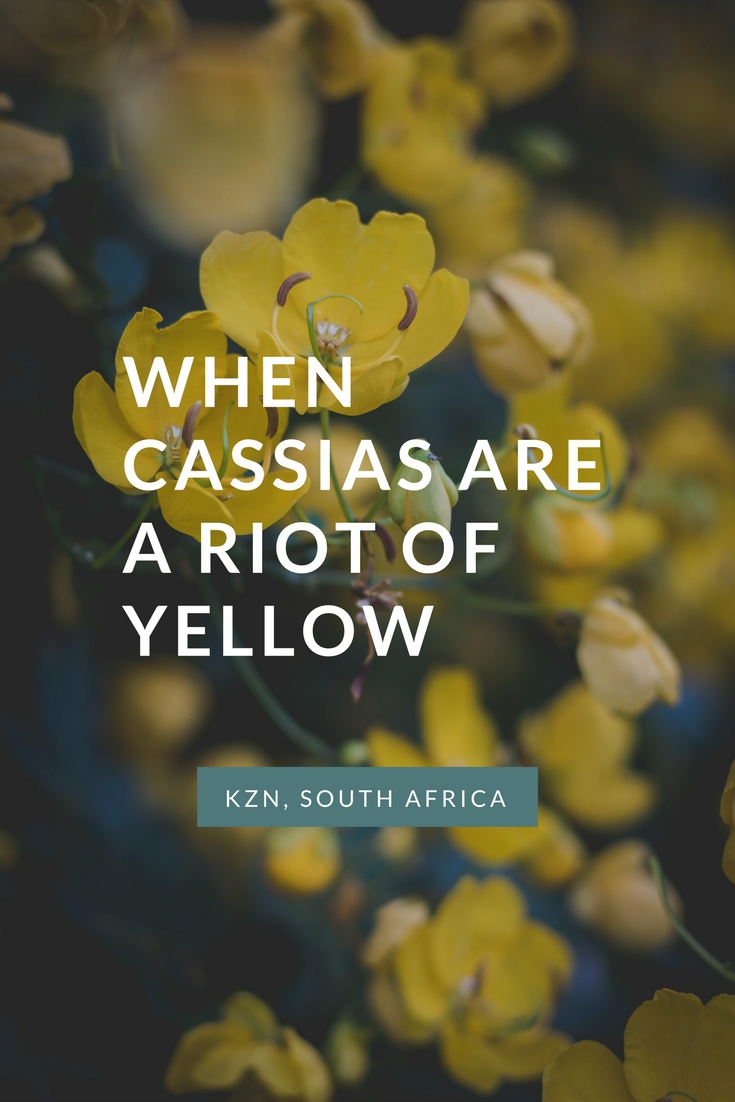 a-riot-of-yellow