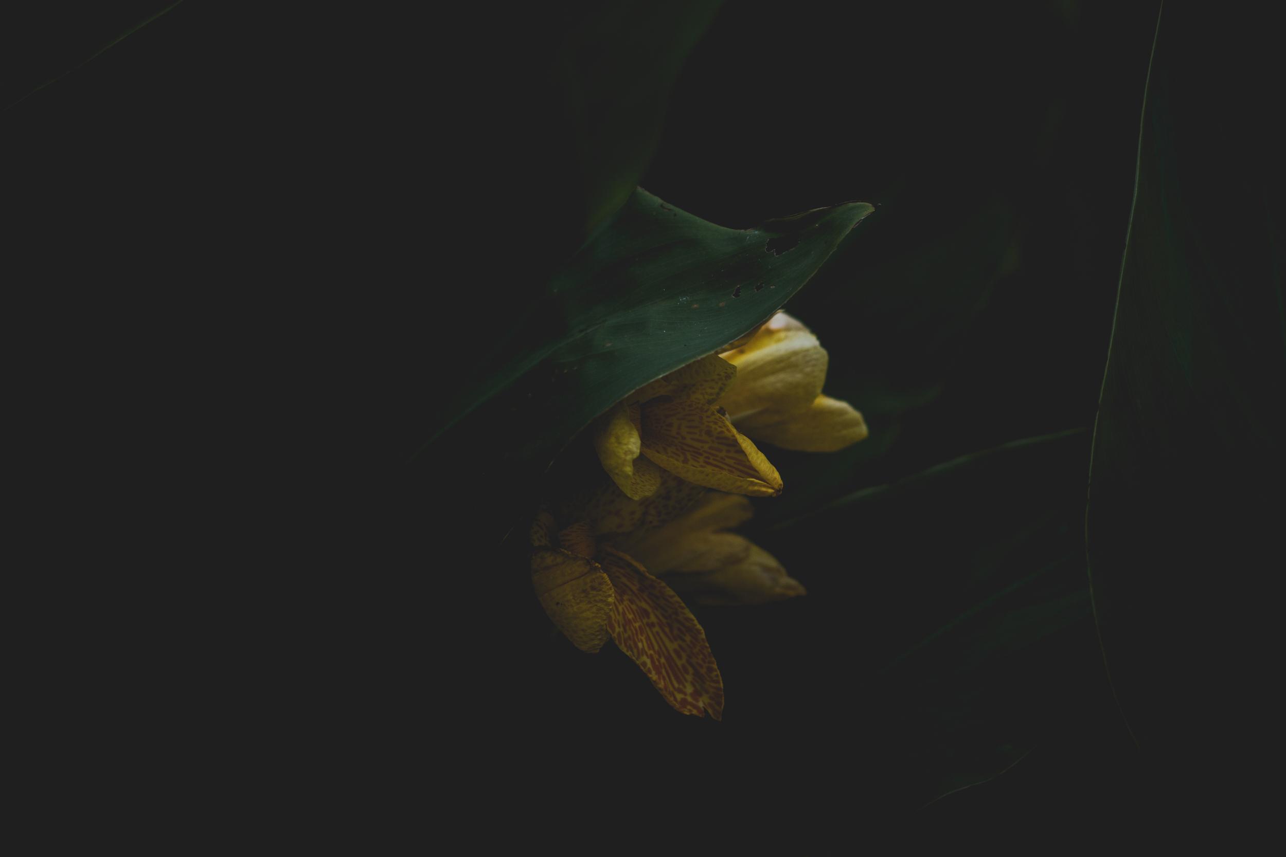 Moody Botanicals18.jpg